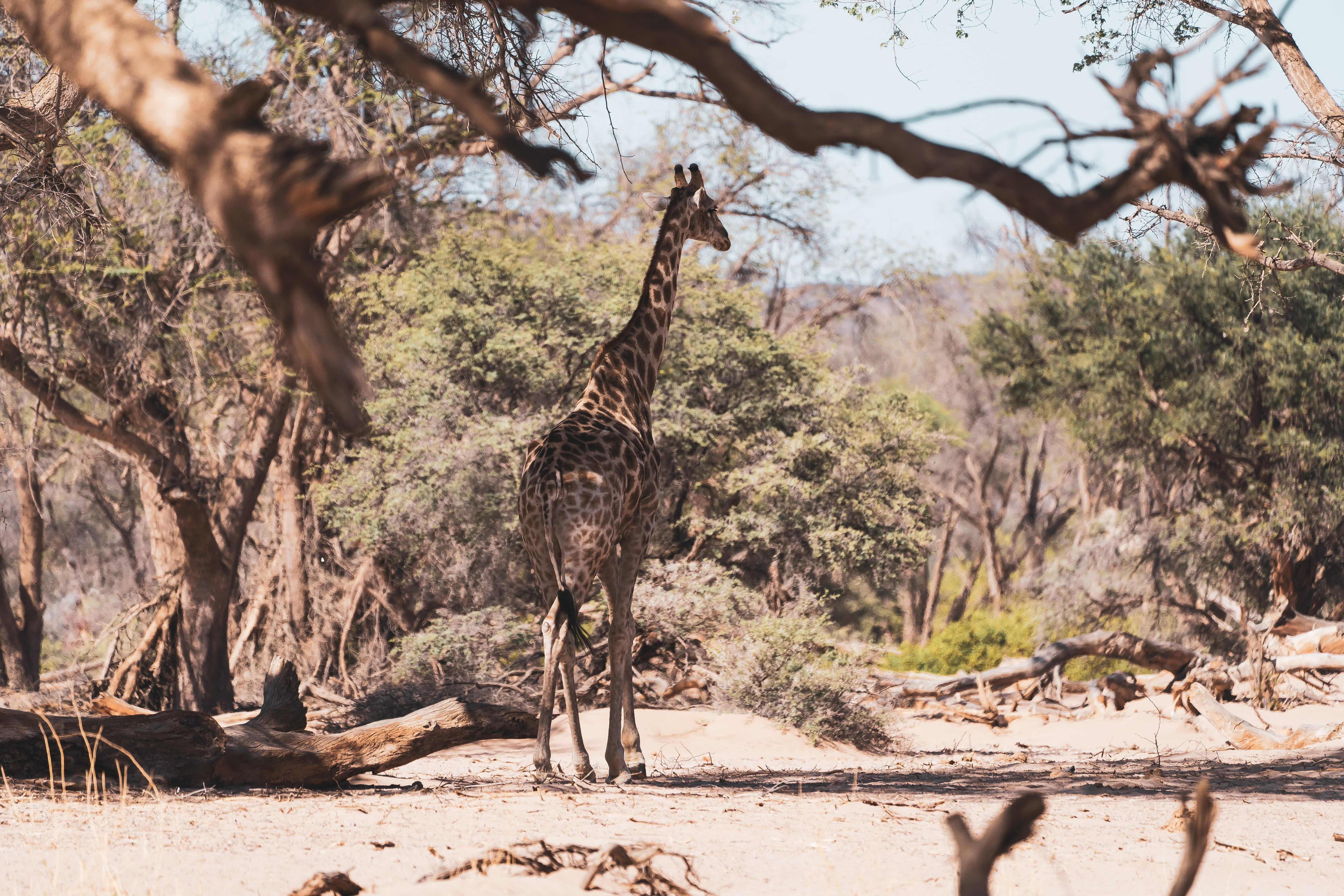 this is a giraffe in its natural habitat. The WWF has emphasised the need for measures to protect the world's biodiversity