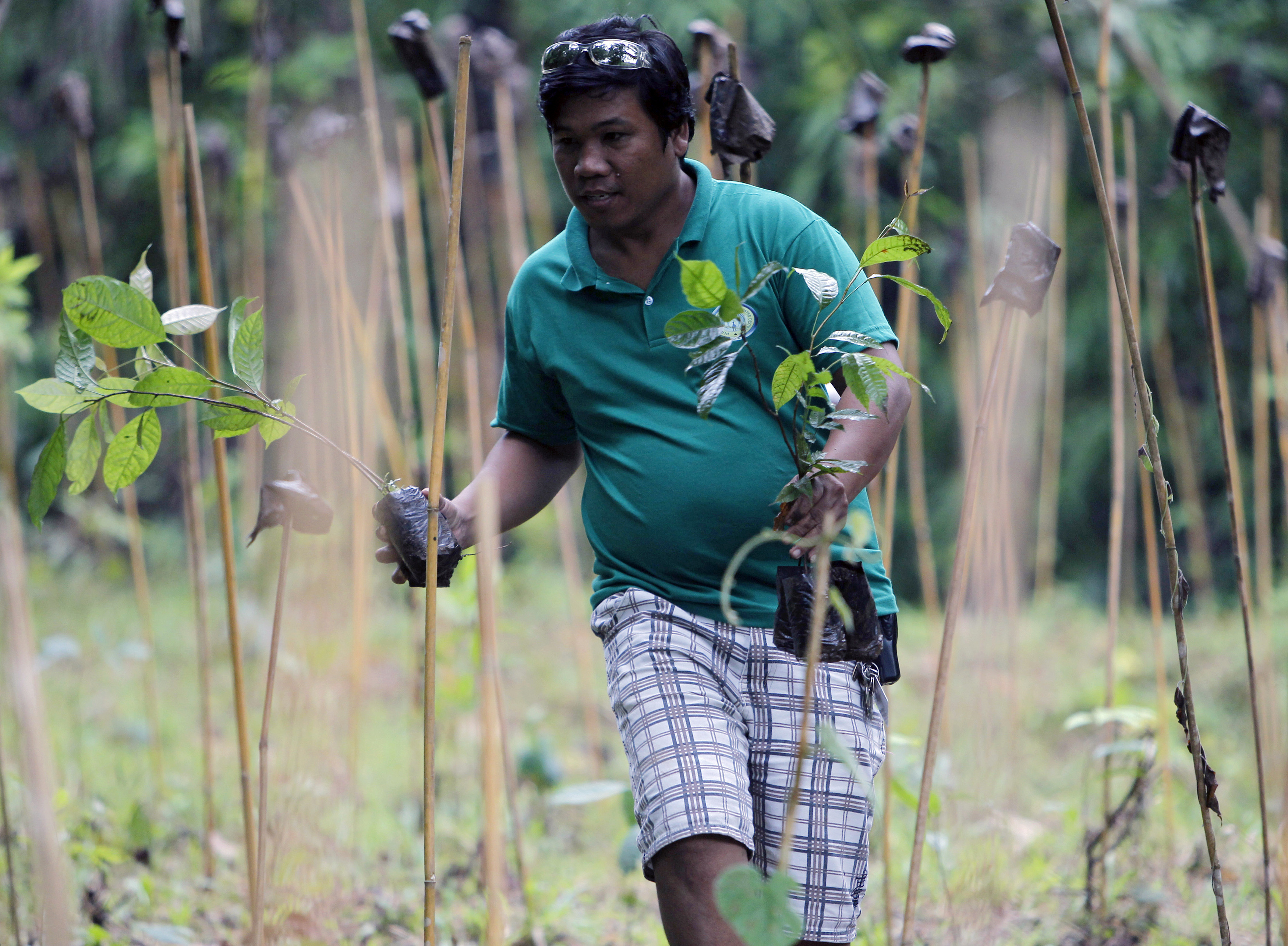 A resident prepares to plant a mahogany tree sapling during the Feast of the Forest event at Cagueban town, Palawan city, western Philippines June 30, 2012. The annual event, a massive tree planting exercise, was started in 1991 to raise awareness on environmental issues, in Palawan city. REUTERS/Romeo Ranoco (PHILIPPINES - Tags: ENVIRONMENT SOCIETY) - GM1E86U15KN01