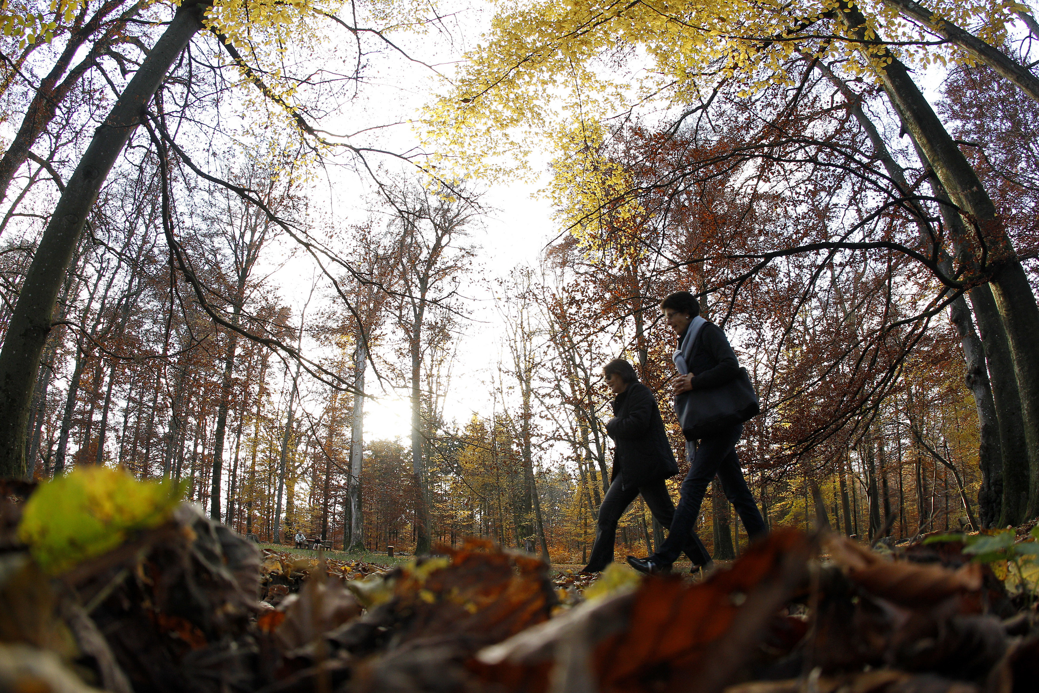 Women enjoy a walk on a leaf-covered path on a sunny and mild autumn afternoon in a forest