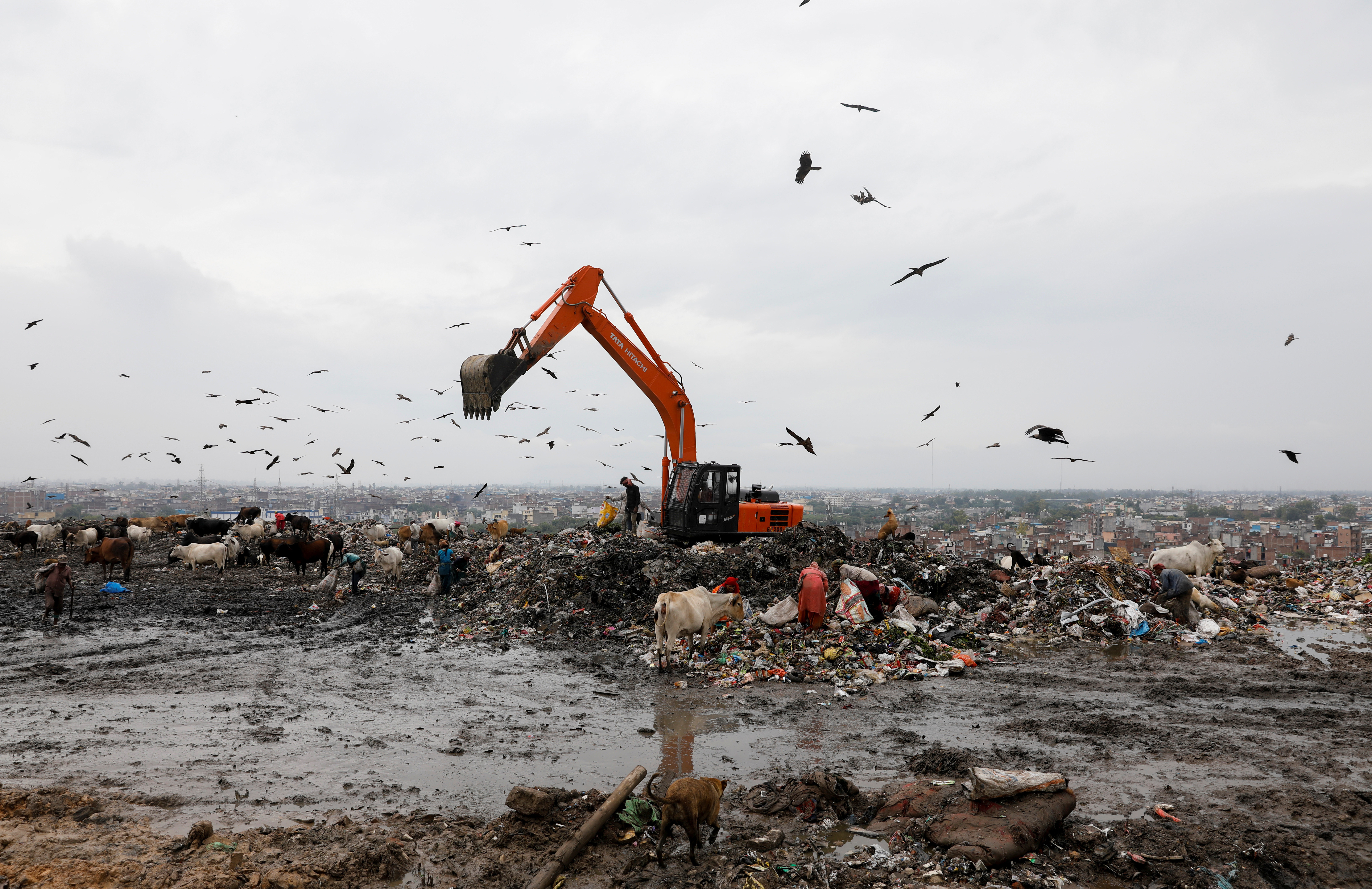Waste collectors look for recyclable materials at a landfill site.