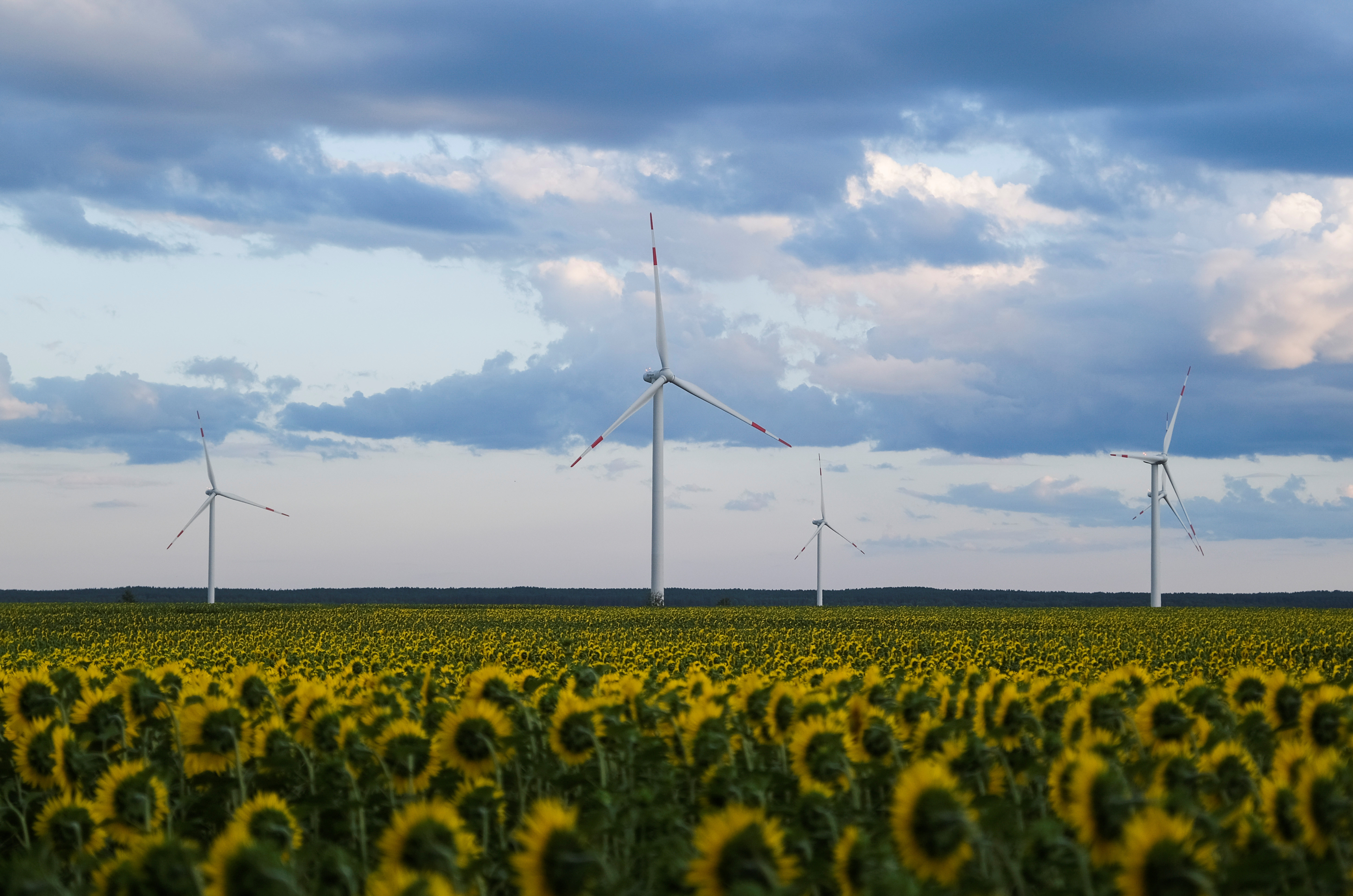 Wind turbines are seen in sunflower field during sunset outside Ulyanovsk, Russia July 20, 2020.