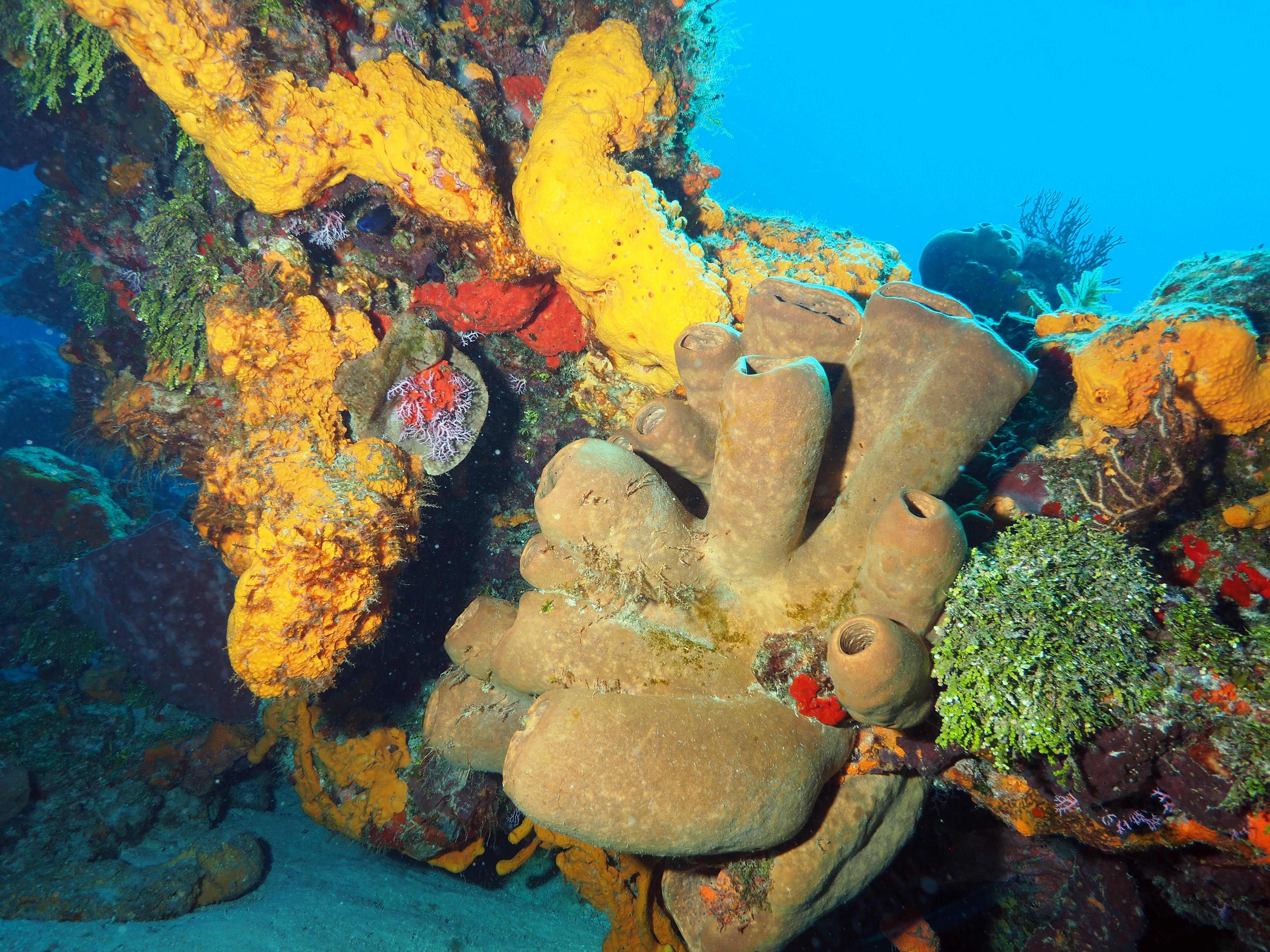 mesoamerican-barrier-reef-mexico-image