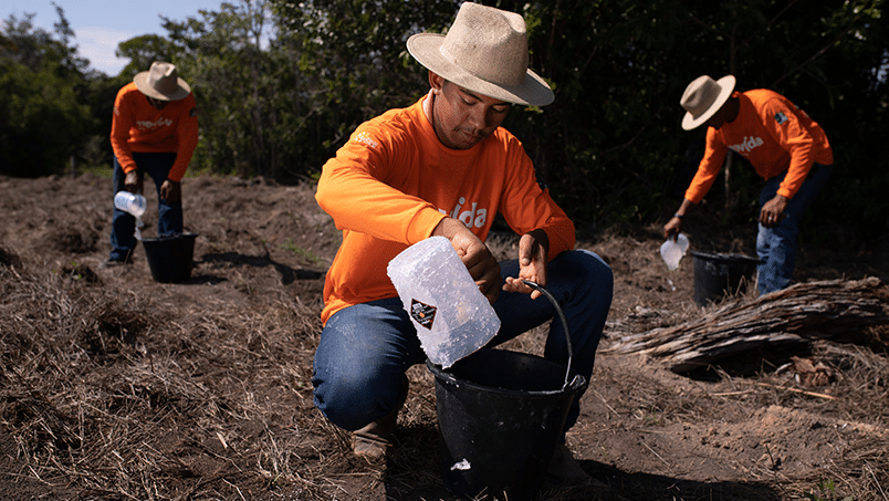 image of the Black Jaguar Foundation planting team adding the water-retaining polymer to the soil
