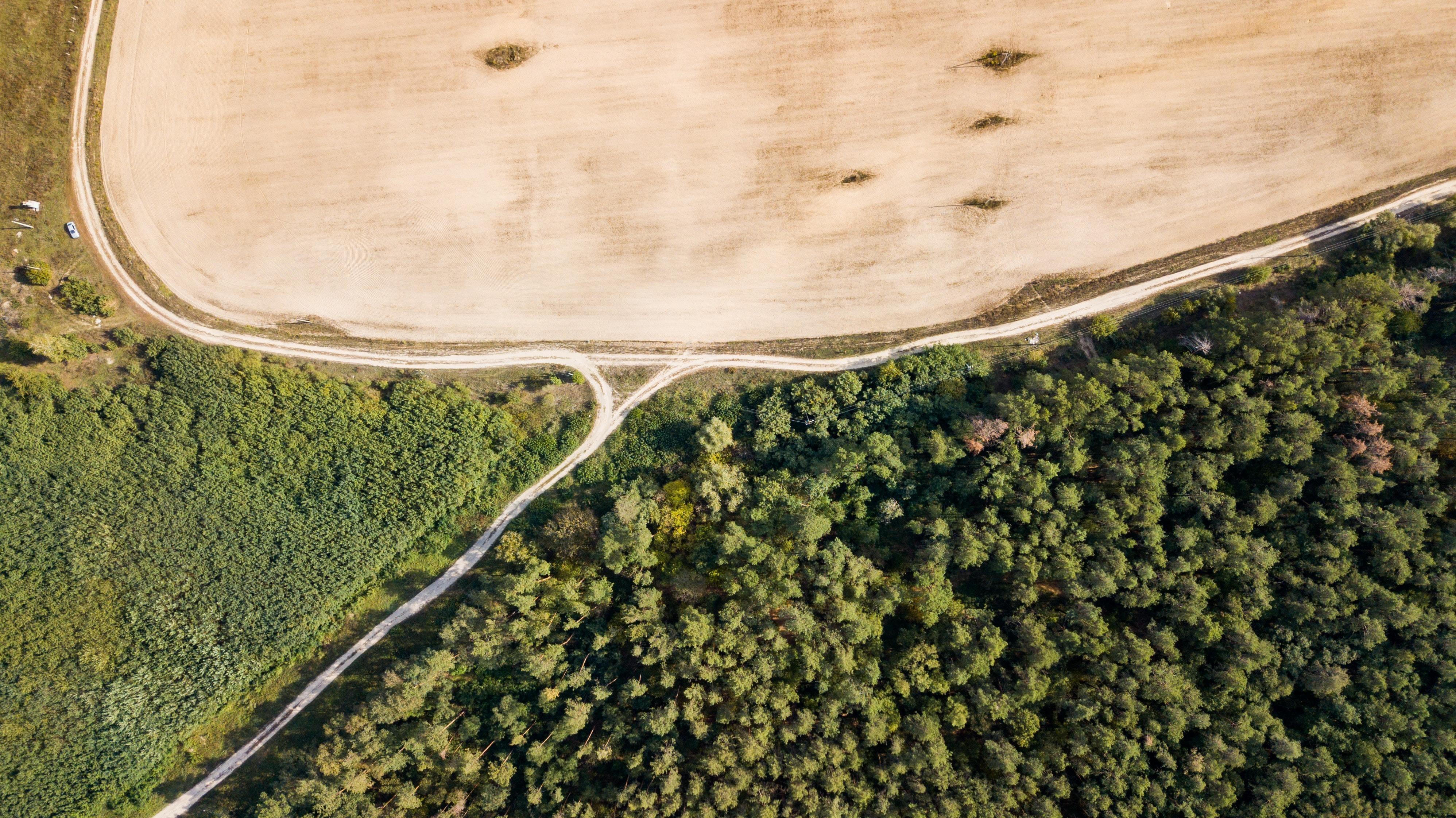 Aerial shot of forest and deforestation.