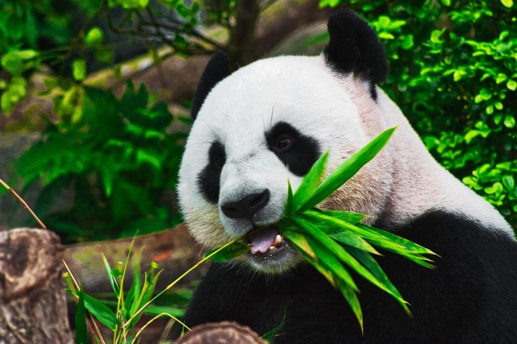 WWF's Living Planet Report 2020 biodiversity threat global health iol agriculture deforestation