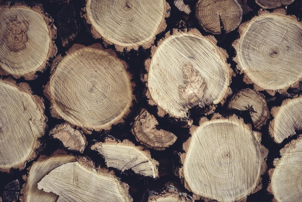 image of some cut logs