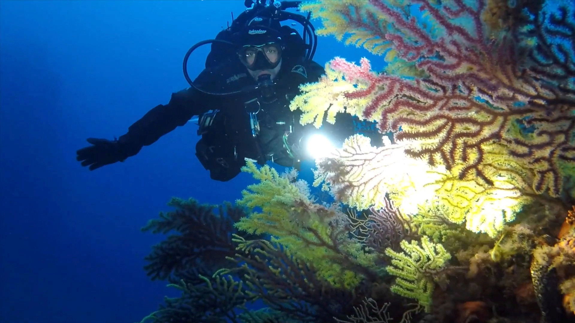 An Italian Coast Guard diver shines a torchlight on a forest of gorgonians (sea fans) and coral at the Secche di Tor Paterno, a protected marine reserve 5 miles off the coast of Rome during a study on the health of Italy's seas and improvements to marine life due to a lack of human activities during the coronavirus disease (COVID-19) lockdown, in this still picture taken from video, April 29, 2020. Picture taken April 29, 2020. Italian Coast Guard/Handout via REUTERS THIS IMAGE HAS BEEN SUPPLIED BY A THIRD PARTY. MANDATORY CREDIT. - RC2MNH9GYLVO