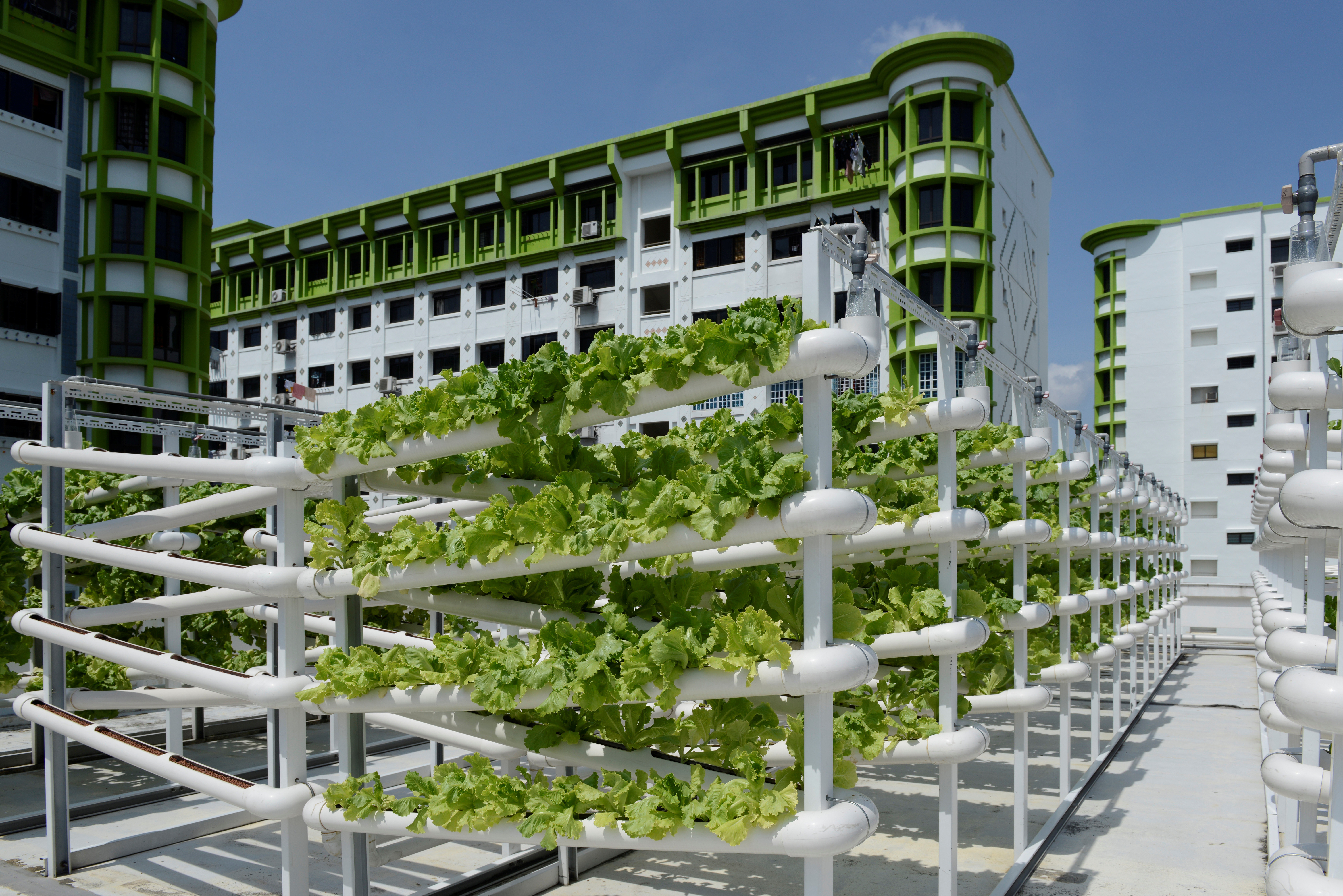 Organic vegetables are seen on growing towers that are primarily made out of polyvinyl chloride (PVC) pipes at Citiponics' urban farm on the rooftop of a multi-storey carpark in a public housing estate in western Singapore April 17, 2018. Picture taken April 17, 2018. REUTERS/Loriene Perera - RC1991373890