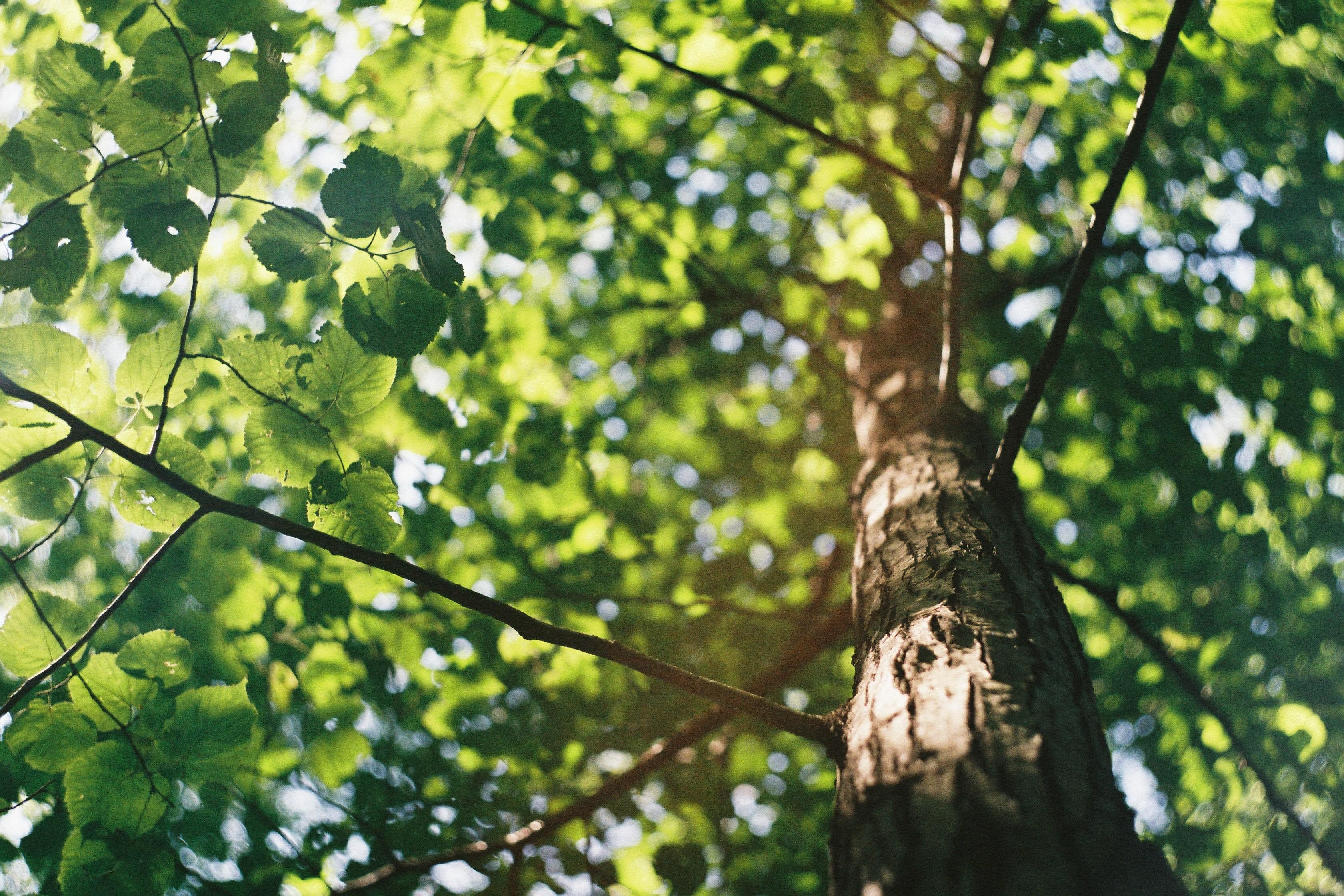 Let Nature Take Its Course In Restoring Our Forests