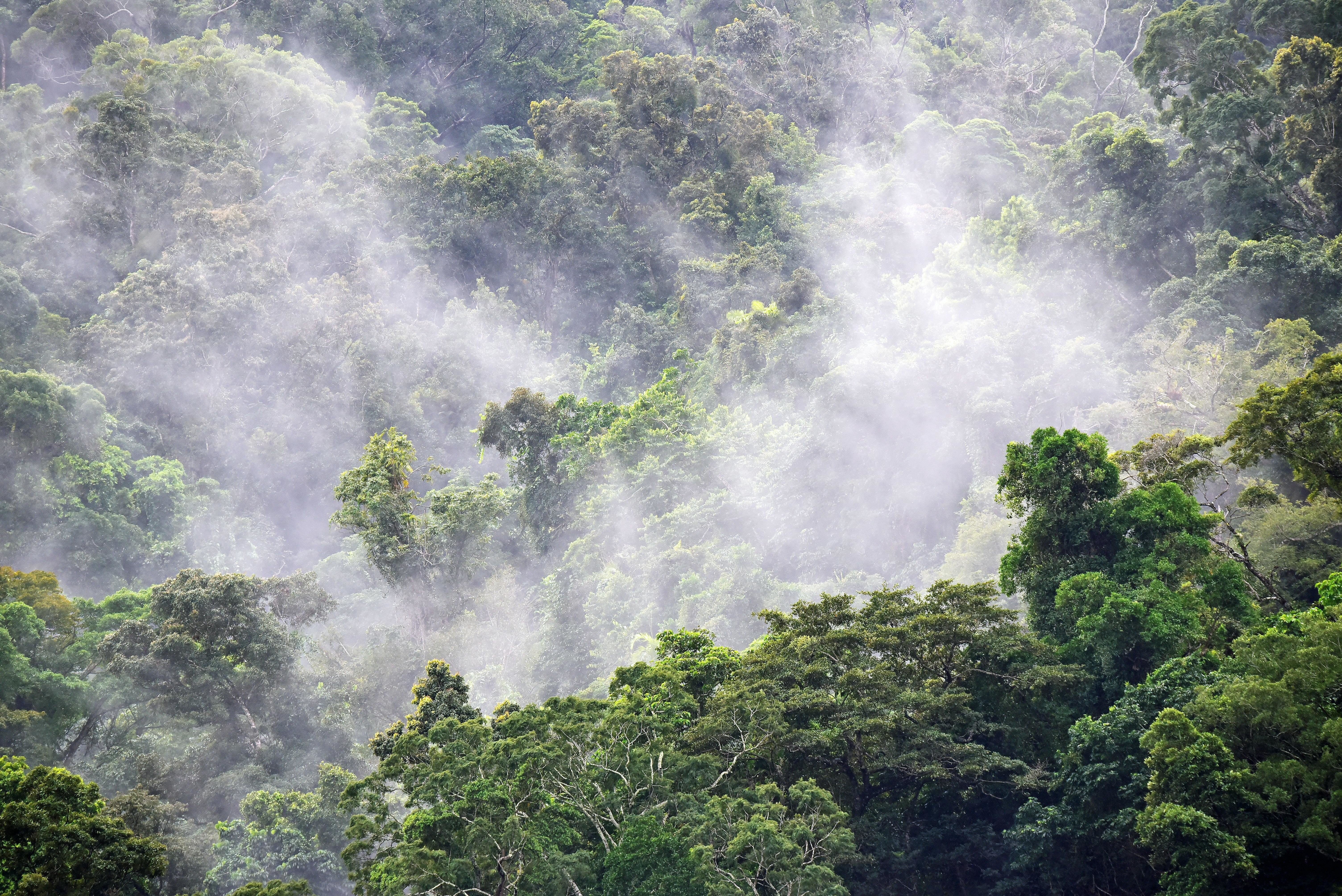 View of rainforest canopy.