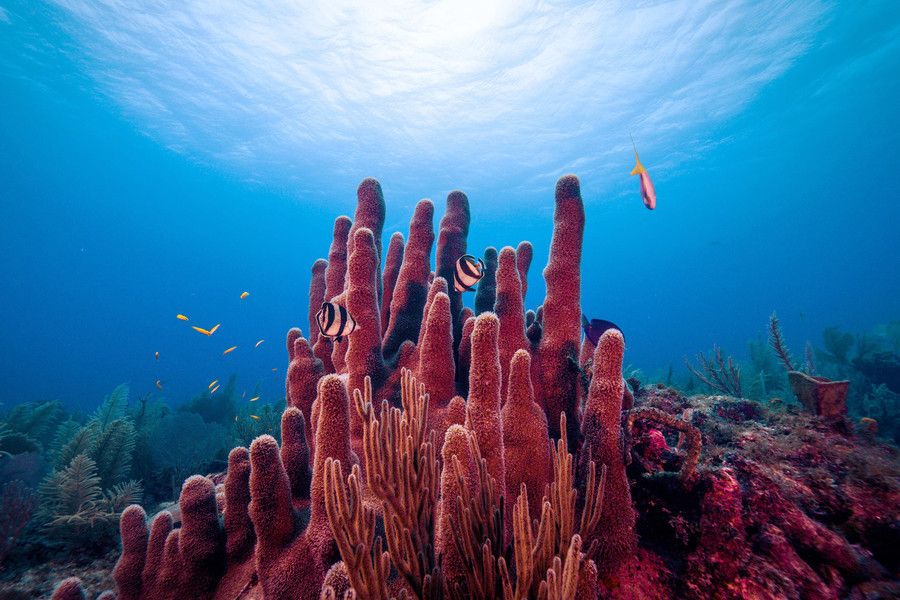 Coral reefs, such as Los Jardines de la Reina, pictured, have microbes that may help protect the coral against certain nutrient imbalances.