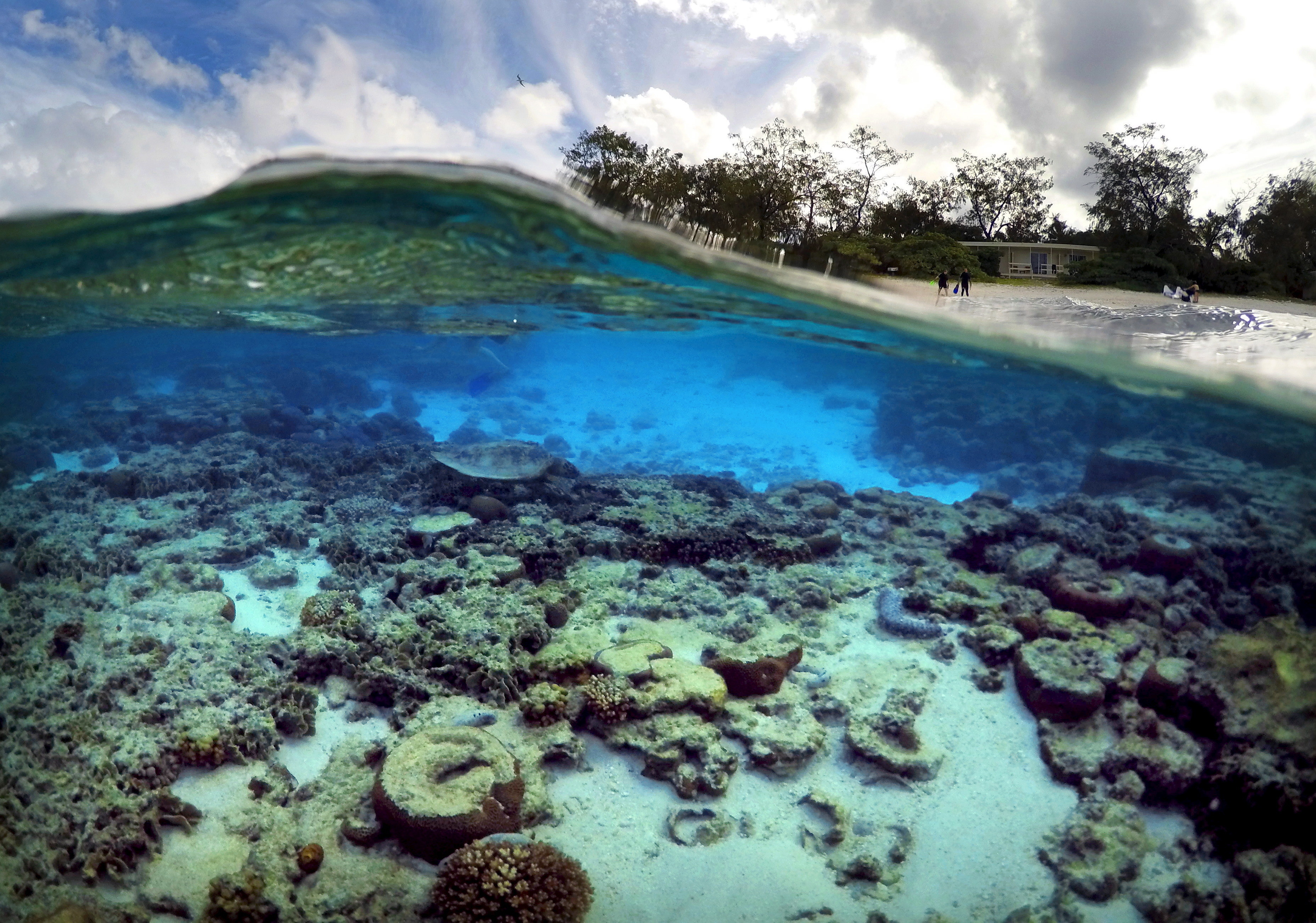 coral-reef-and-climate-change