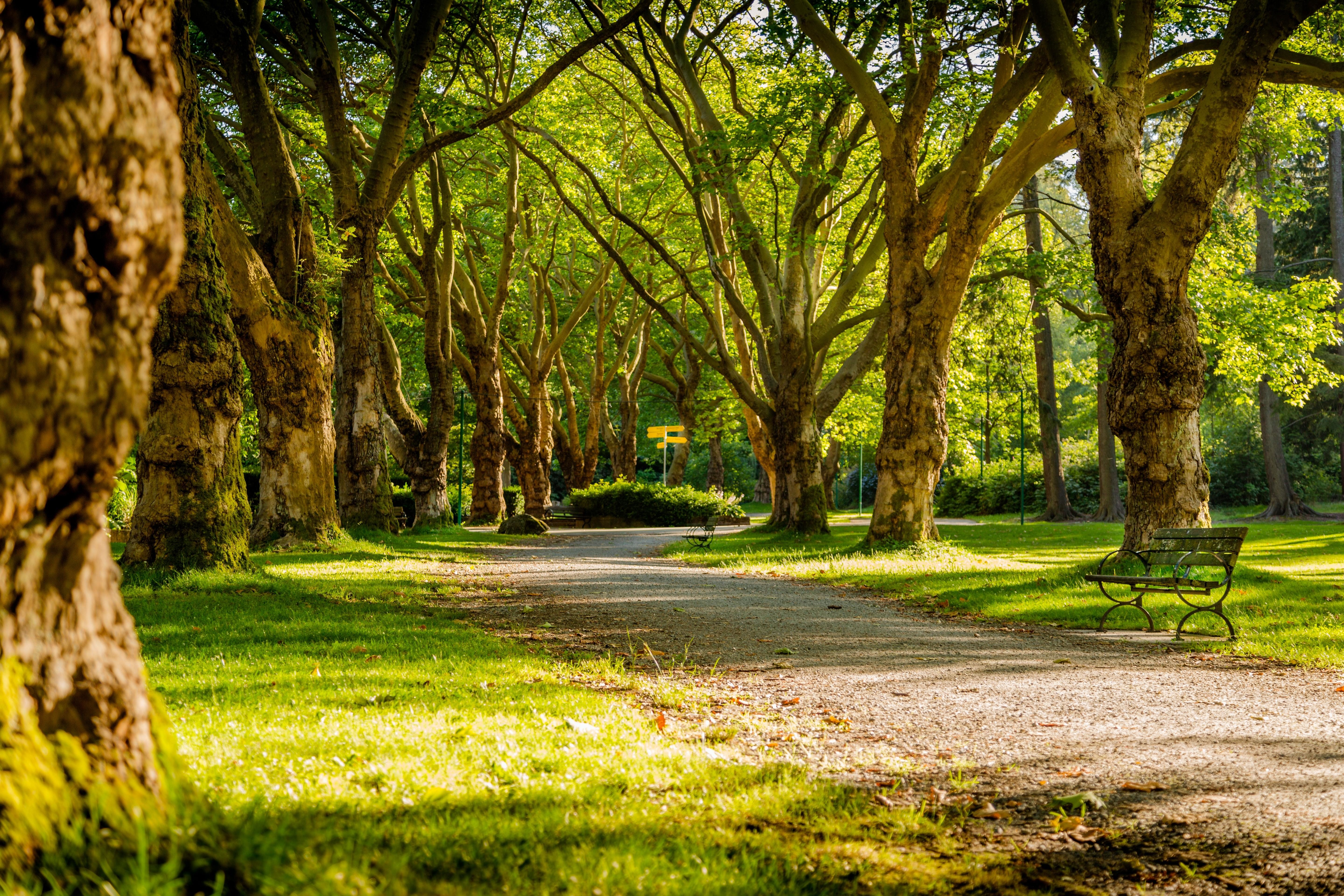 in the U.S., time in green parks like this one here is being prescribed as a type of 'medication' by some doctors