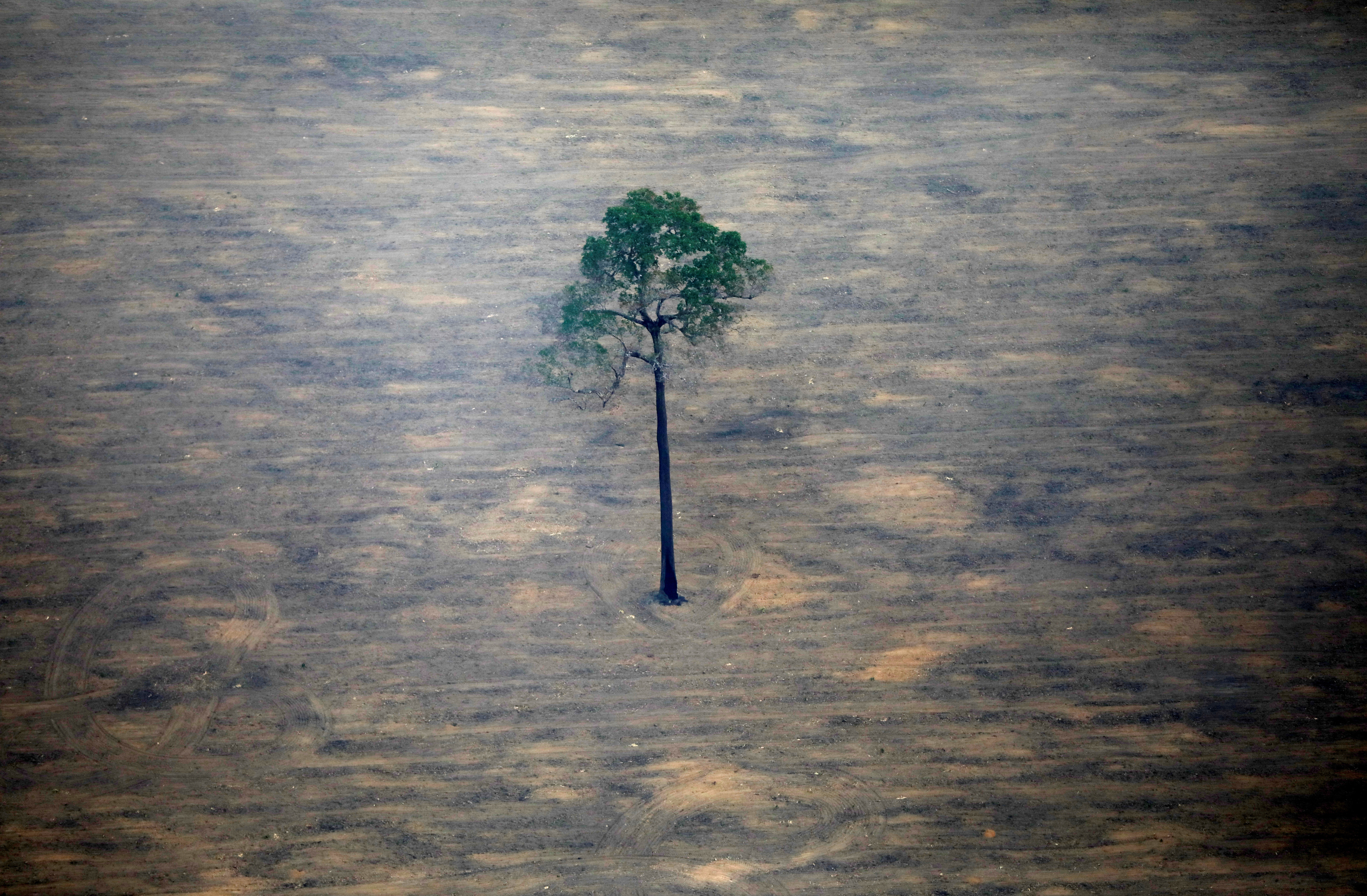 An aerial view shows a deforested plot of the Amazon near Porto Velho, Rondonia State, Brazil, September 17, 2019. REUTERS/Bruno Kelly     TPX IMAGES OF THE DAY - RC17B1A0A8F0