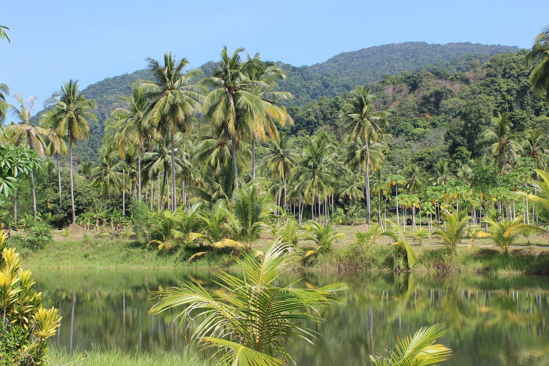 image of a rainforest