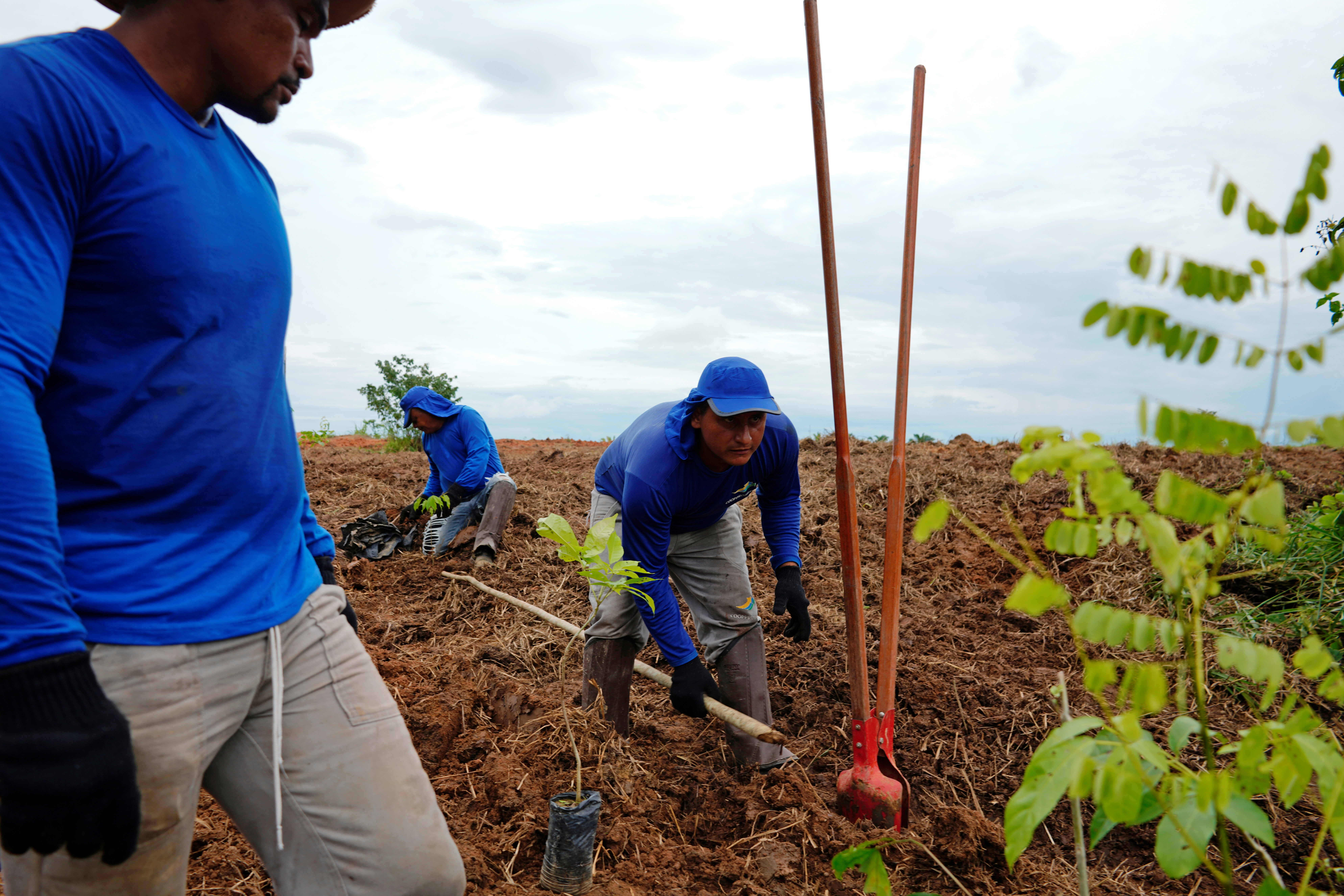 Farmers plant trees during a reforestation project in Nova Mutum, Brazil