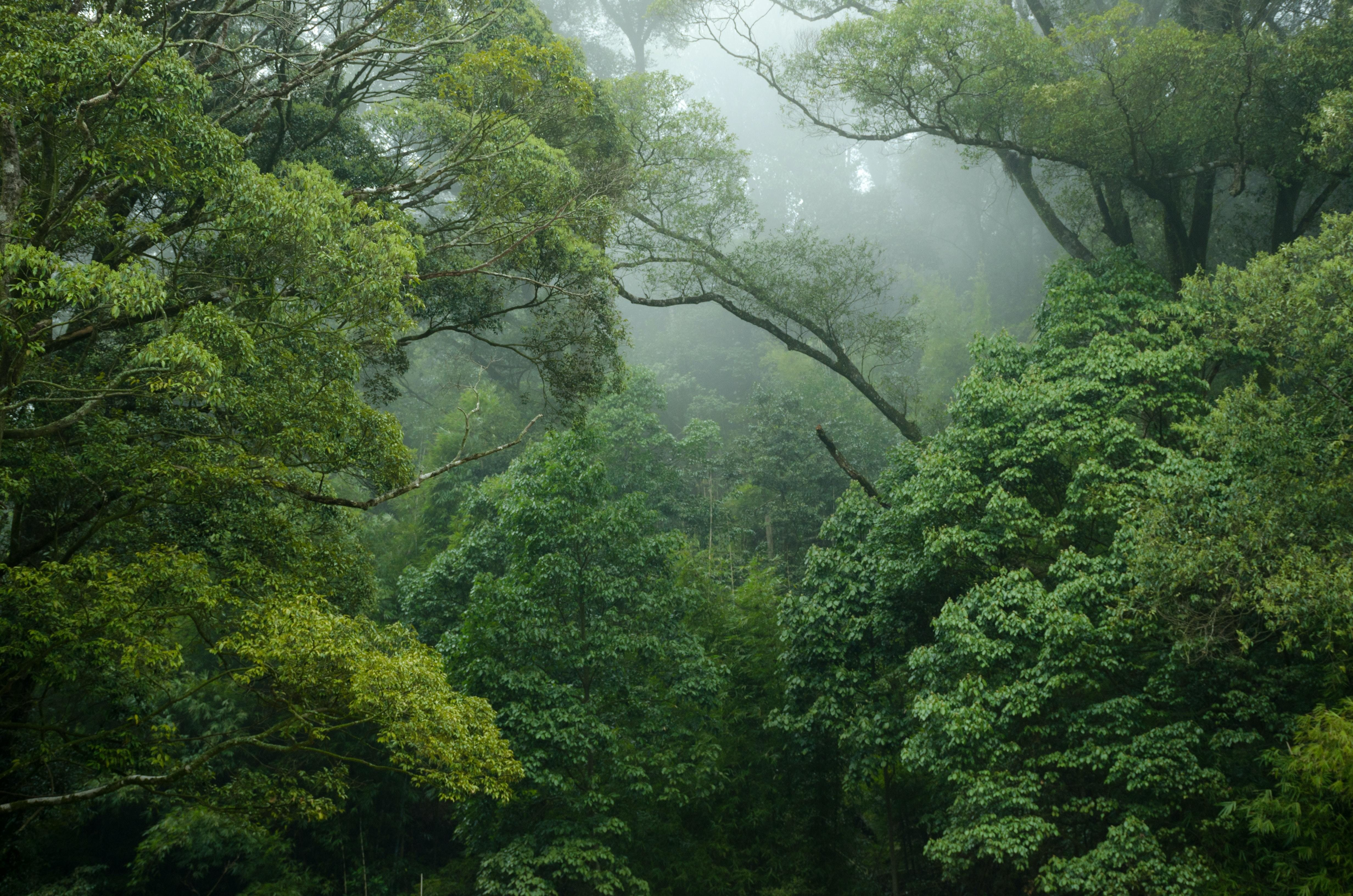 carbon-rich forests, like this forest here, must be protected in order to save the planet