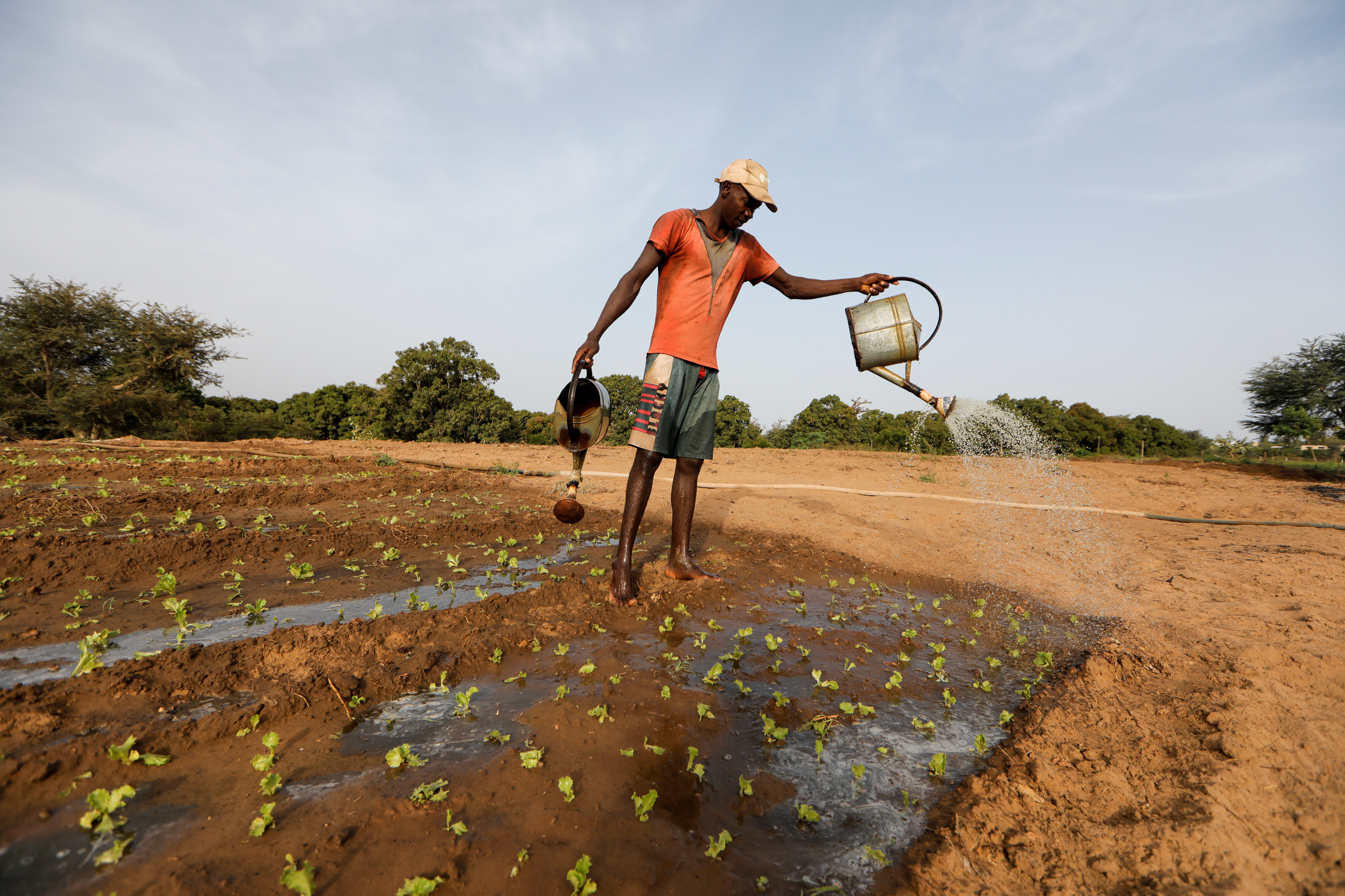 A farm worker manually irrigates a salad field, amid the outbreak of the coronavirus disease (COVID-19), In Thies, Senegal June 3, 2020. Picture taken June 3, 2020.