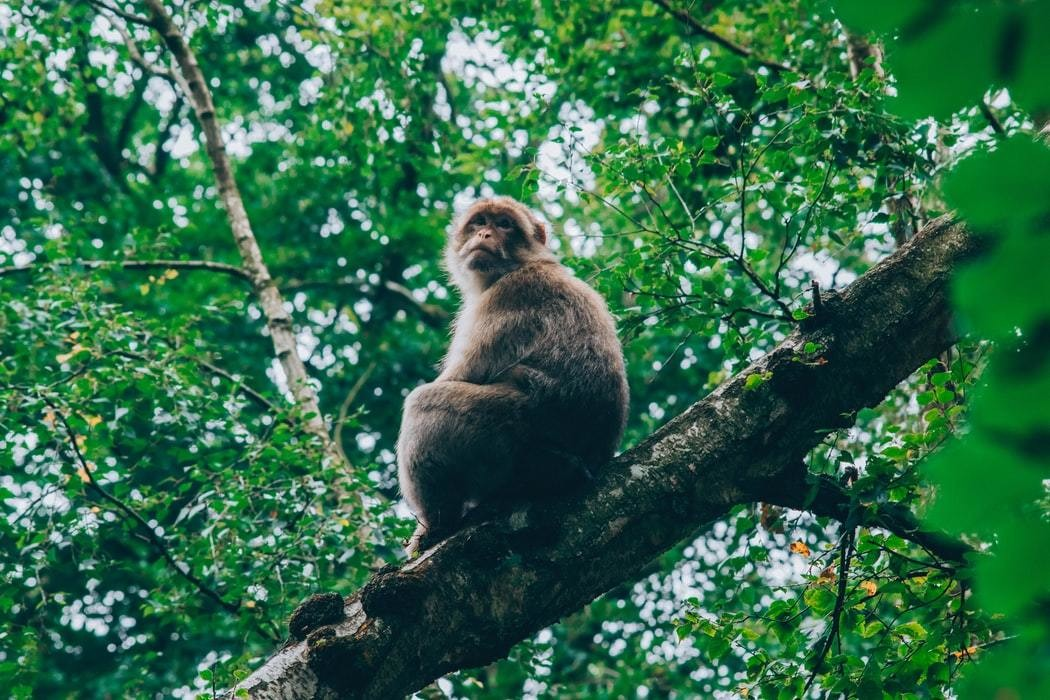 image of a monkey in a forest