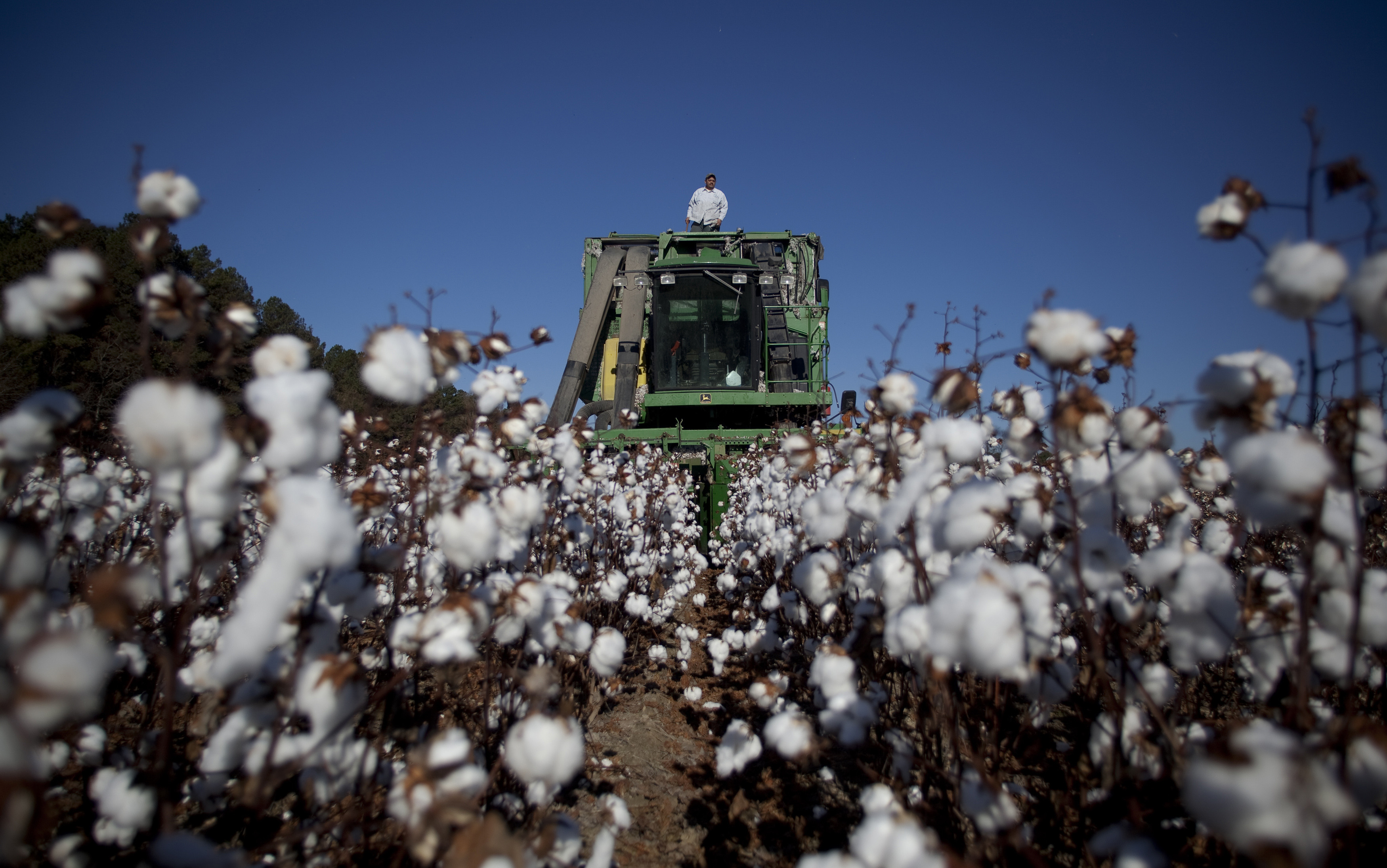 Operator James Grooms stands on top of a cotton picker at Baxley & Baxley Farms as he waits for cotton to be unloaded, in Minturn, South Carolina November 24, 2012. The third generation farm, located along South Carolina's cotton corridor, harvested just under 1100 acres of cotton this season. The Baxley family plants several crops but cotton is the cash crop and the most profitable. Picture taken November 24, 2012.