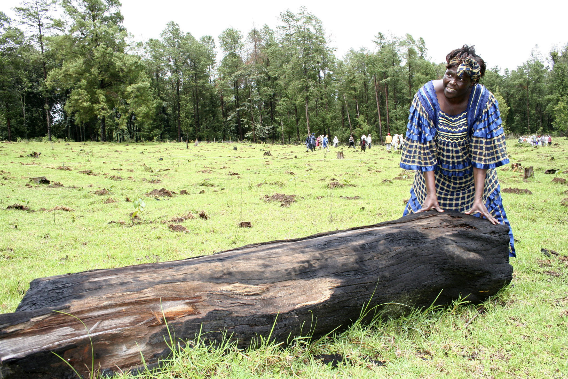 Nobel prize winner Wangari Maathai, who is also Kenya's Assistant Minister for Environment, touches a tree stump cut by illegal loggers during a ceremony to plant trees in Sabatia forest Koibatek, in Eldama Ravine, November 23, 2006. Some 3,000 seedlings were planted by 150 volunteers from Japan, in a tree planting event as part of the one billion tree planting campaign in support of the Green Belt Movement lead by Wangari Maathai. REUTERS/Antony Gitonga (KENYA) - GM1DTZVRNEAA