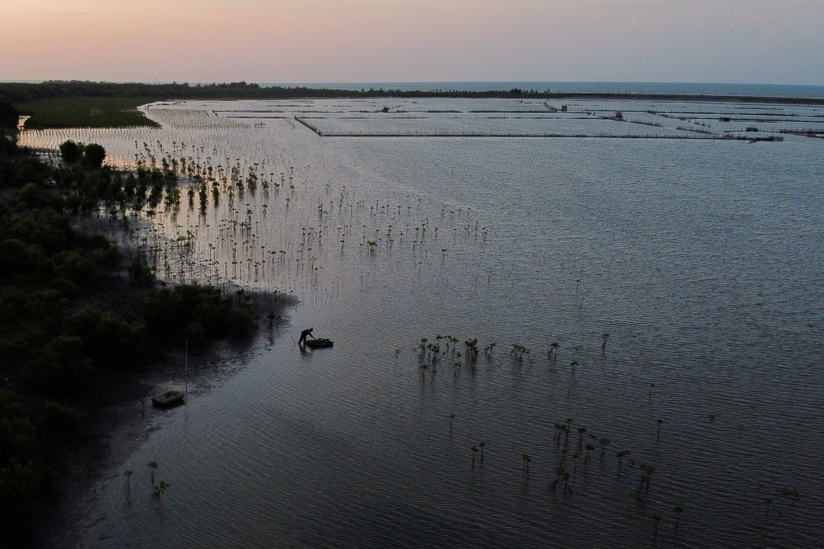 A local pond farmer is seen among the newly planted mangrove trees at Tiris beach during sunset in Pabeanilir village, Indramayu regency, West Java province, Indonesia, March 11, 2021. Picture taken with a drone, March 11, 2021. REUTERS/Willy Kurniawan - RC2DPM924HPI