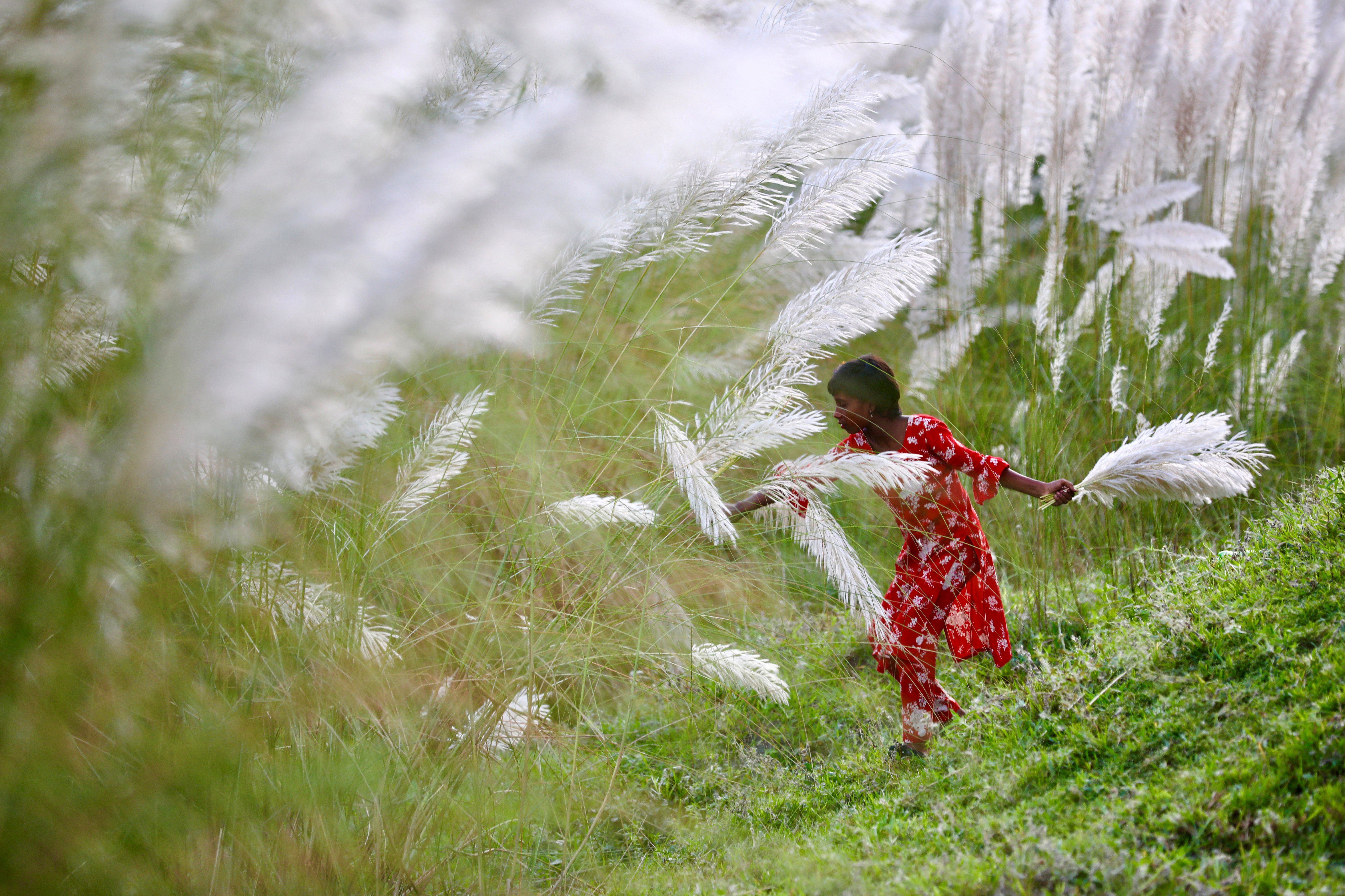 A girl picks catkins in a field amid the COVID-19 pandemic in Sarighat, on the outskirts of Dhaka, Bangladesh, October 2, 2020. REUTERS/Mohammad Ponir Hossain - RC2DAJ9TH9FJ