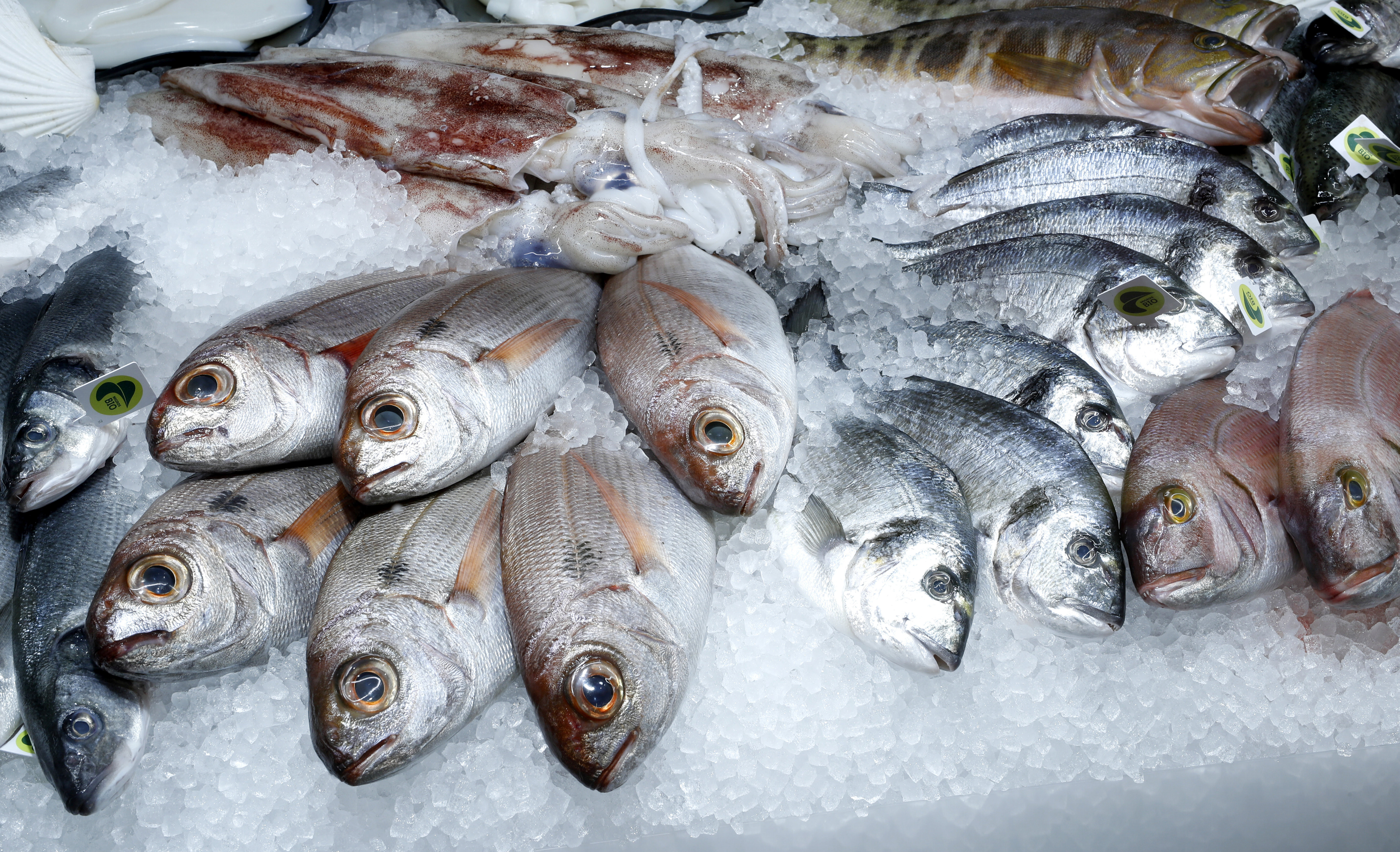 Various fresh fishes are displayed at a fish counter at a supermarket of Swiss retail group Migros, as the spread of the coronavirus disease (COVID-19) continues, in Zurich, Switzerland June 24, 2020. REUTERS/Arnd Wiegmann - RC2XFH9JGZ2B