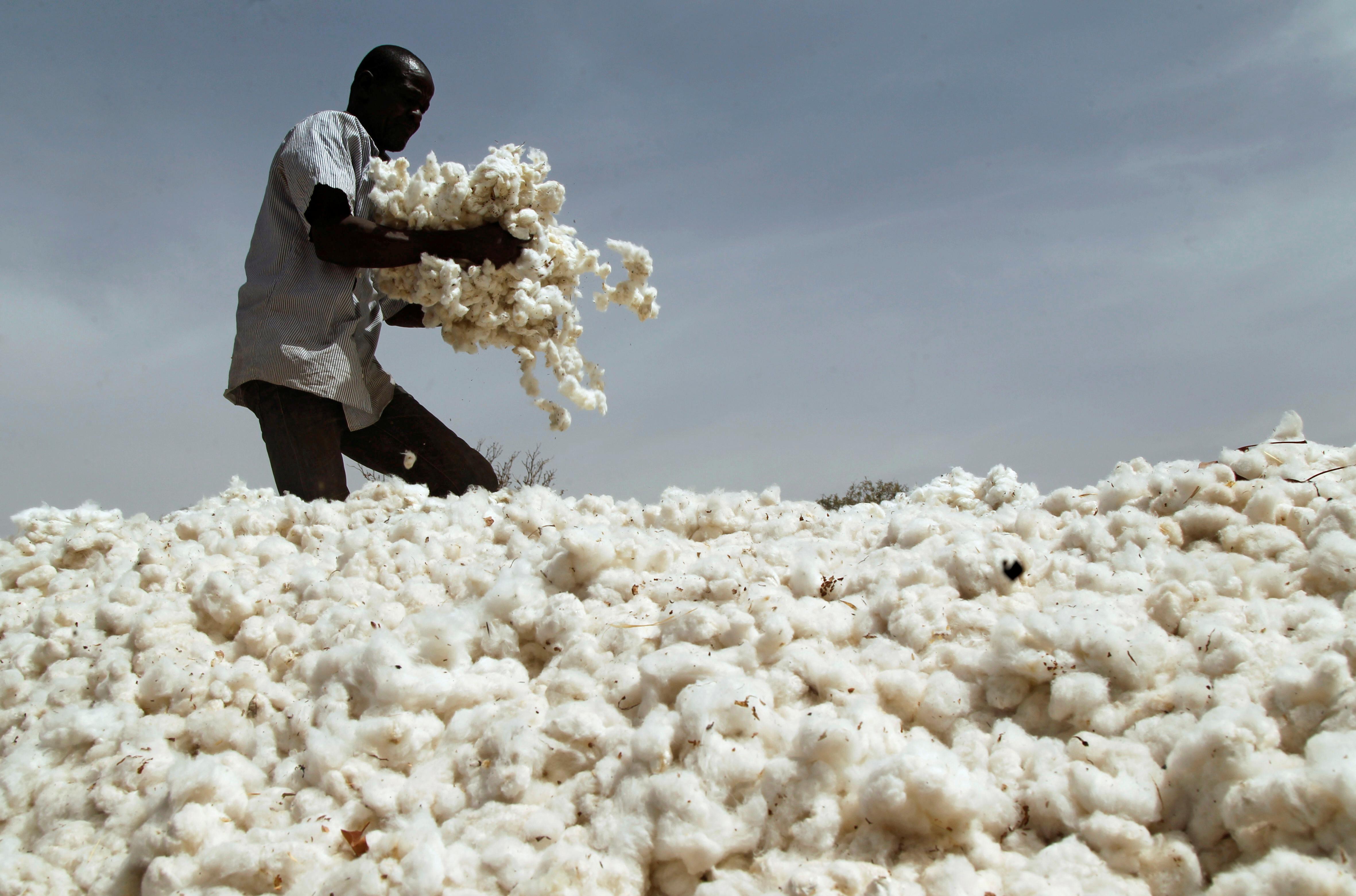 A farmer works in a cotton field in Kongolekan village near Bobo-Dioulasso, Burkina Faso