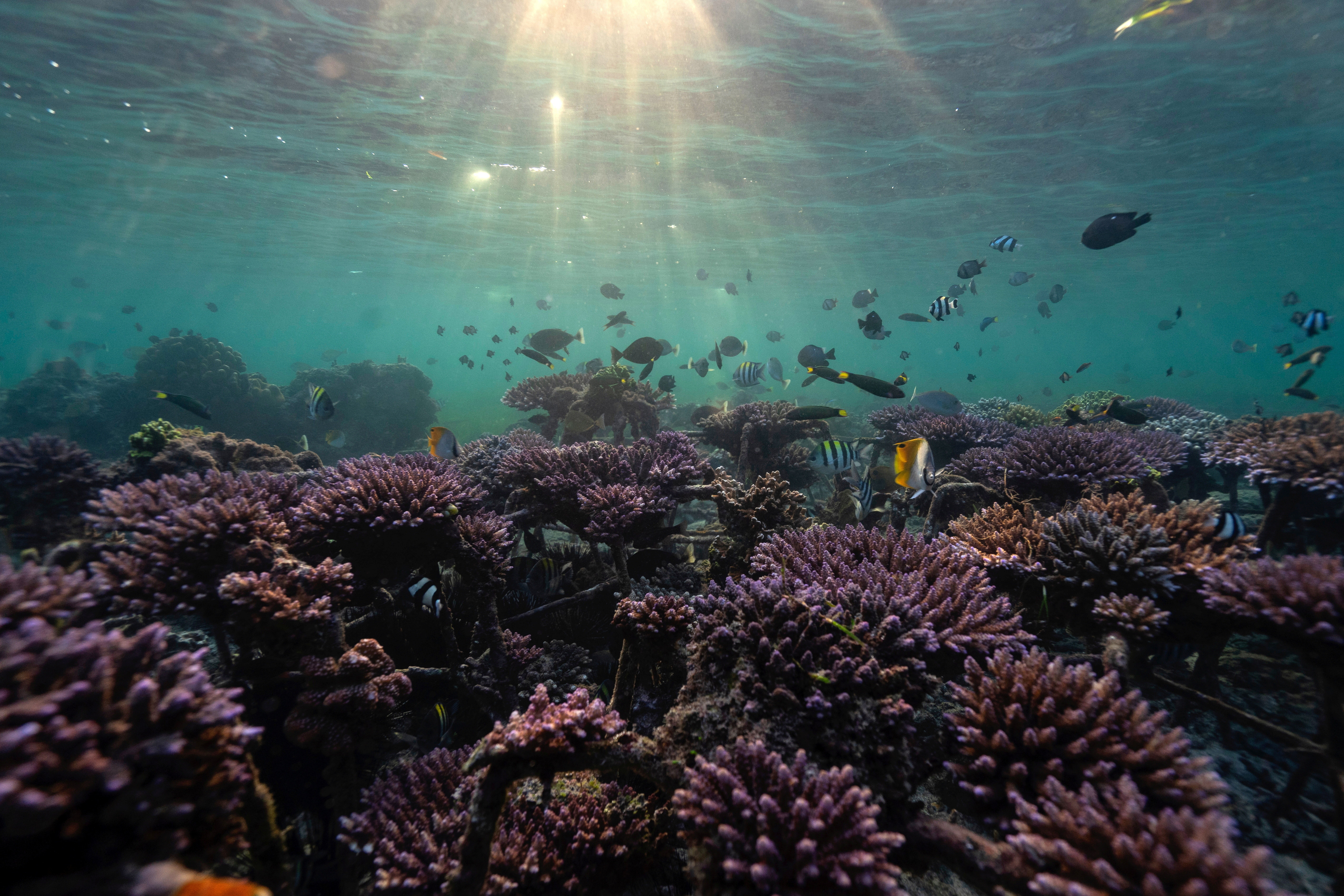 Fish swim at a coral reef garden in Nusa Dua, Bali, Indonesia, May 28, 2021. Picture taken May 28, 2021. REUTERS/Nyimas Laula - RC26PN9T0YJ5