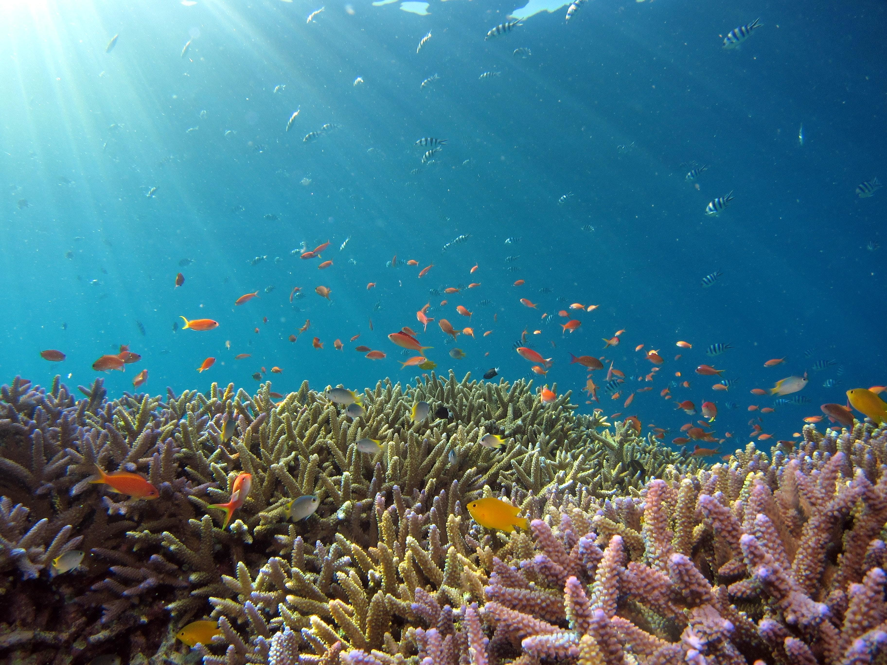 coral, shown here with fish swimming around it, is an important part of marine ecosystems - but climate change is causing the harmful process of coral bleaching