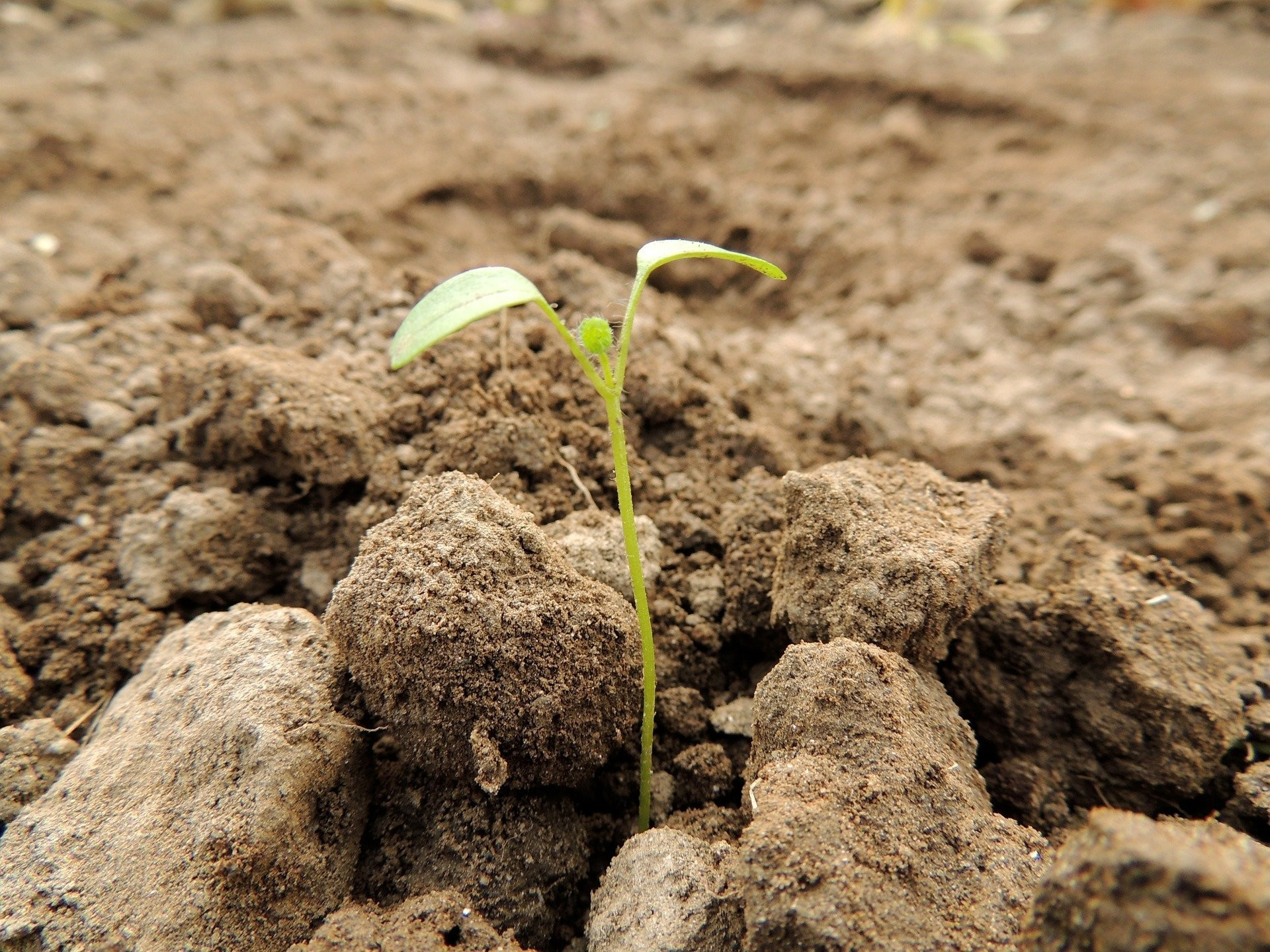 millions of trees, like this seedling here, have been planted in coal mines