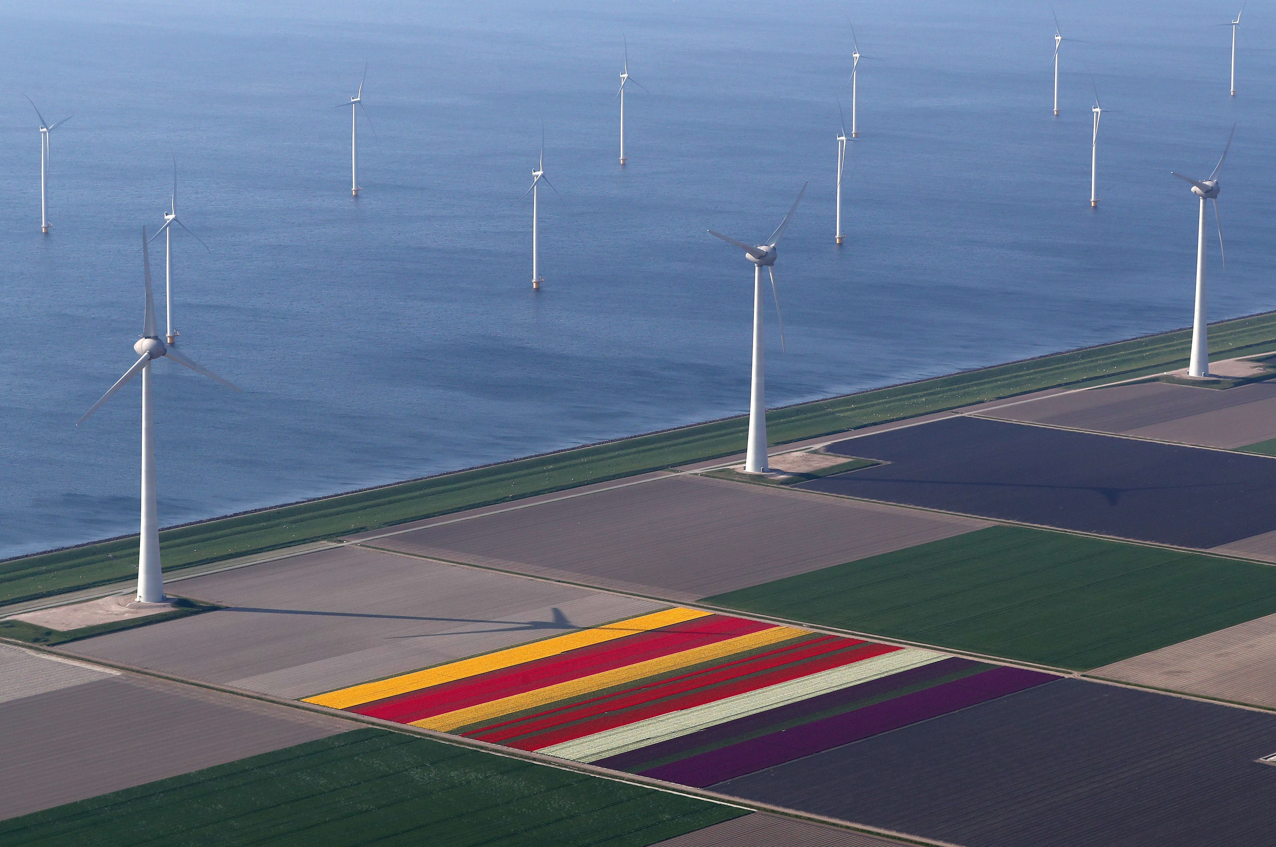 An aerial view wind turbines of tulip fields near the city of Creil, Netherlands