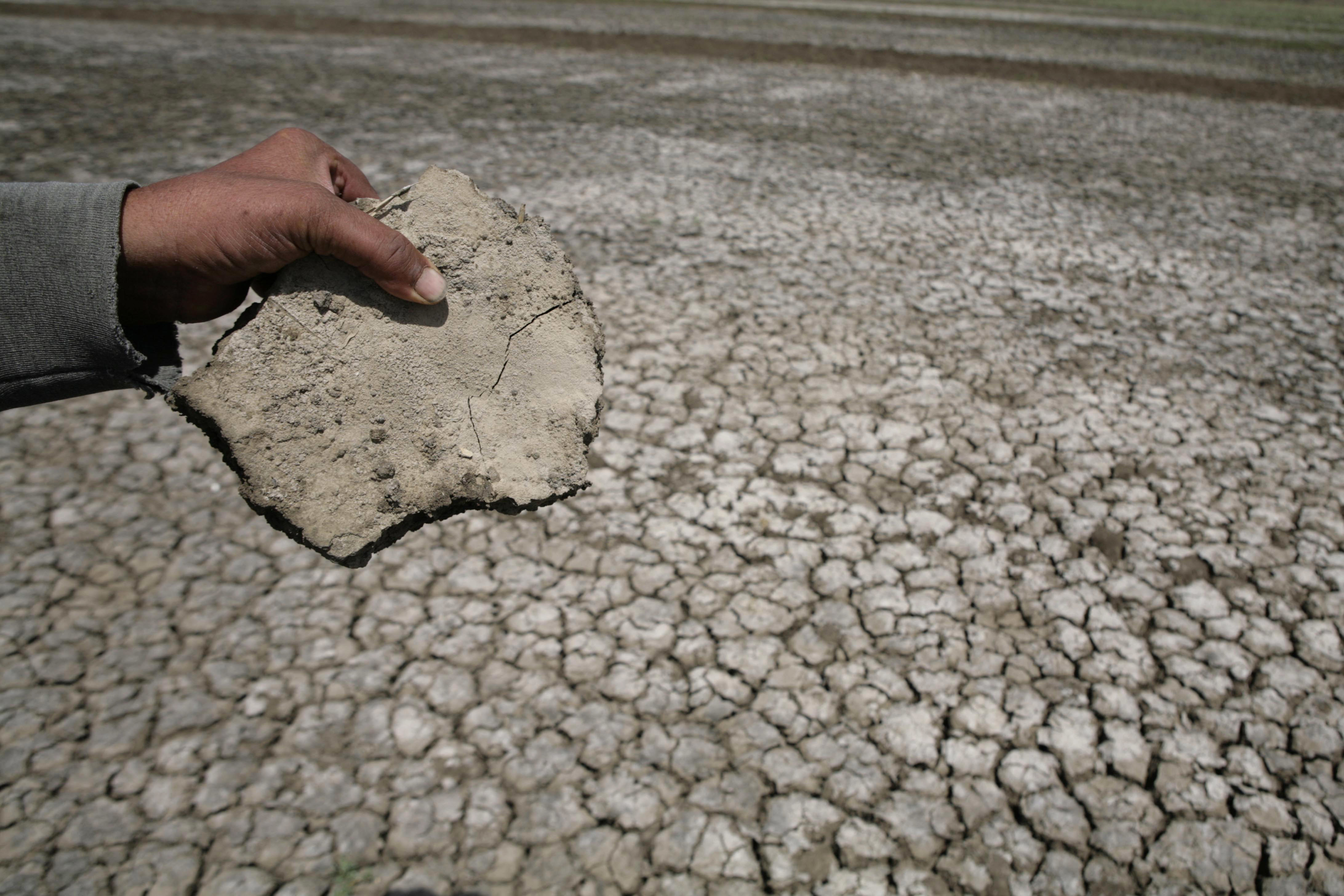 an Egyptian farmer removes pieces of cracked earth from his fields in a village near Balqis, 260 km (161 miles) northeast of Cairo