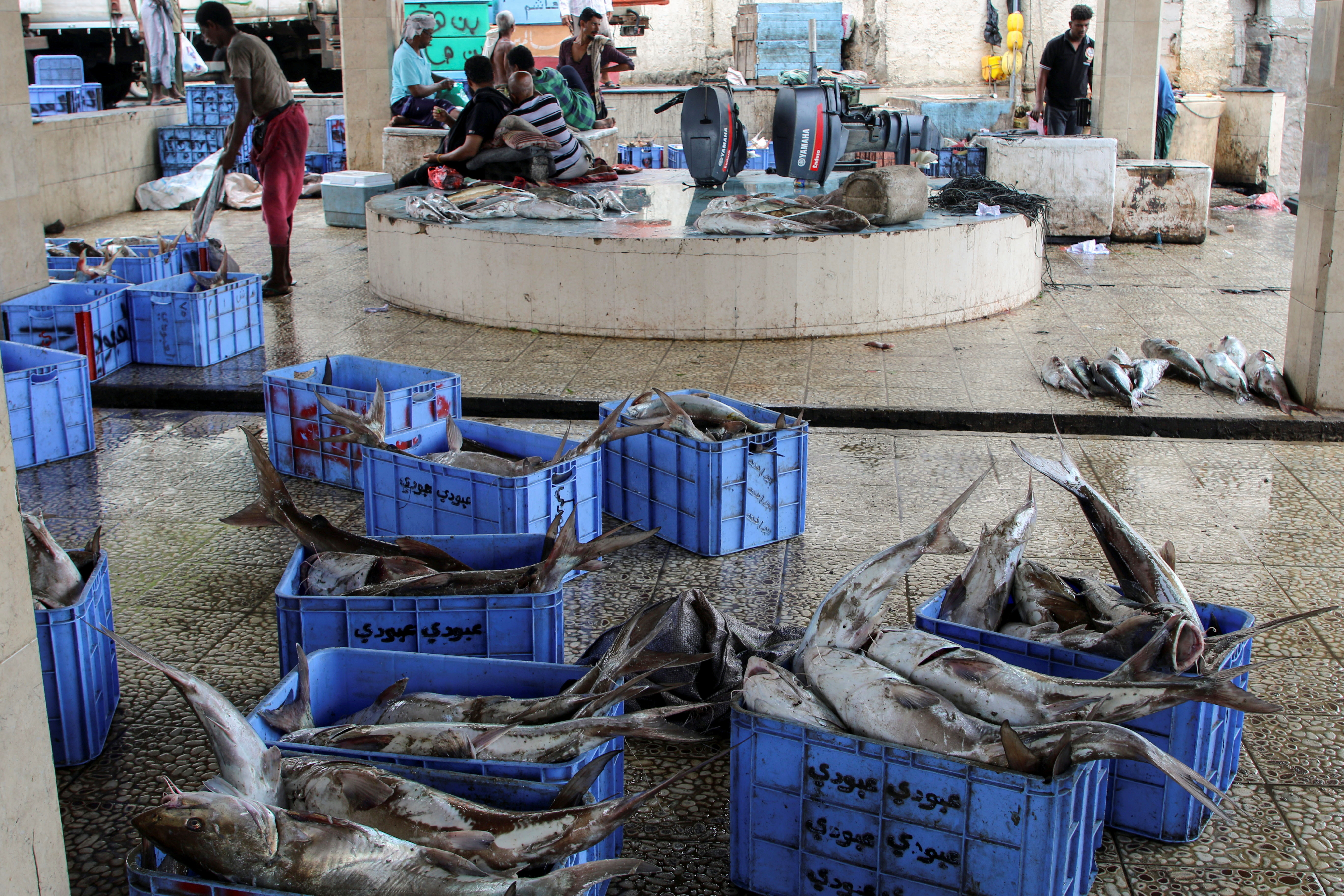 Boxes of fish are pictured at a fish market.