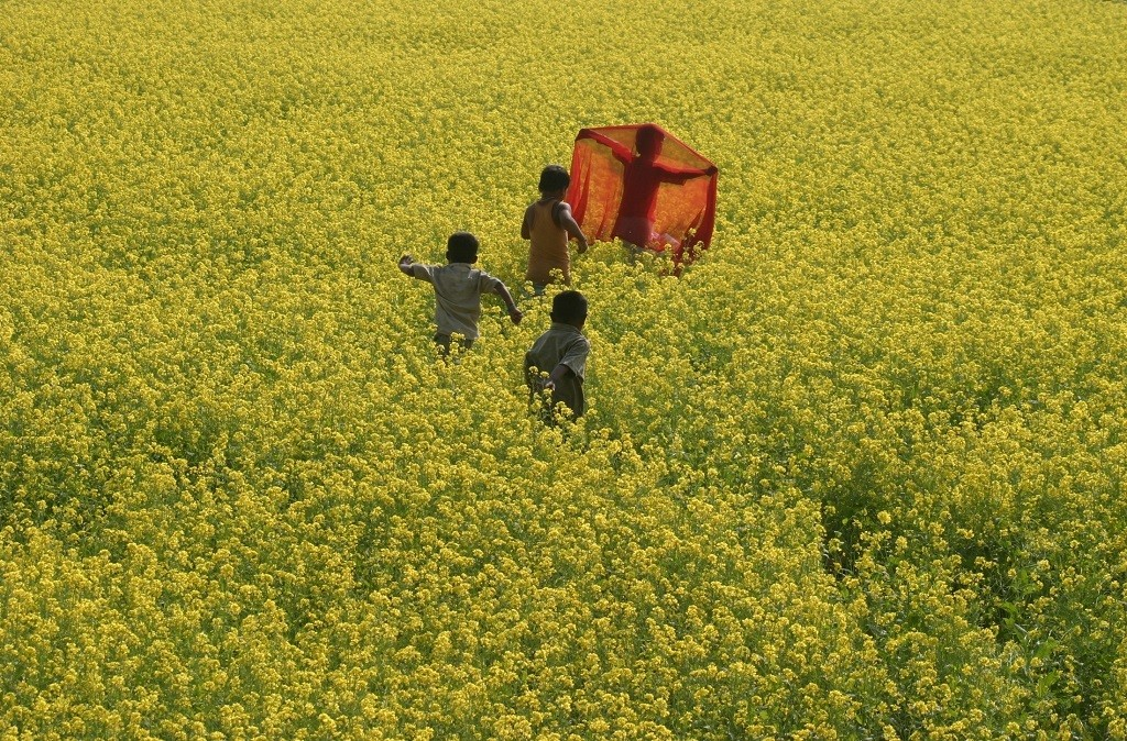 Children play in a mustard field at Mohini village, about 190 km (118 miles) south of the northeastern Indian city of Siliguri, December 6, 2007. REUTERS/Rupak De Chowdhuri (INDIA) - GM1DWTHPCLAA