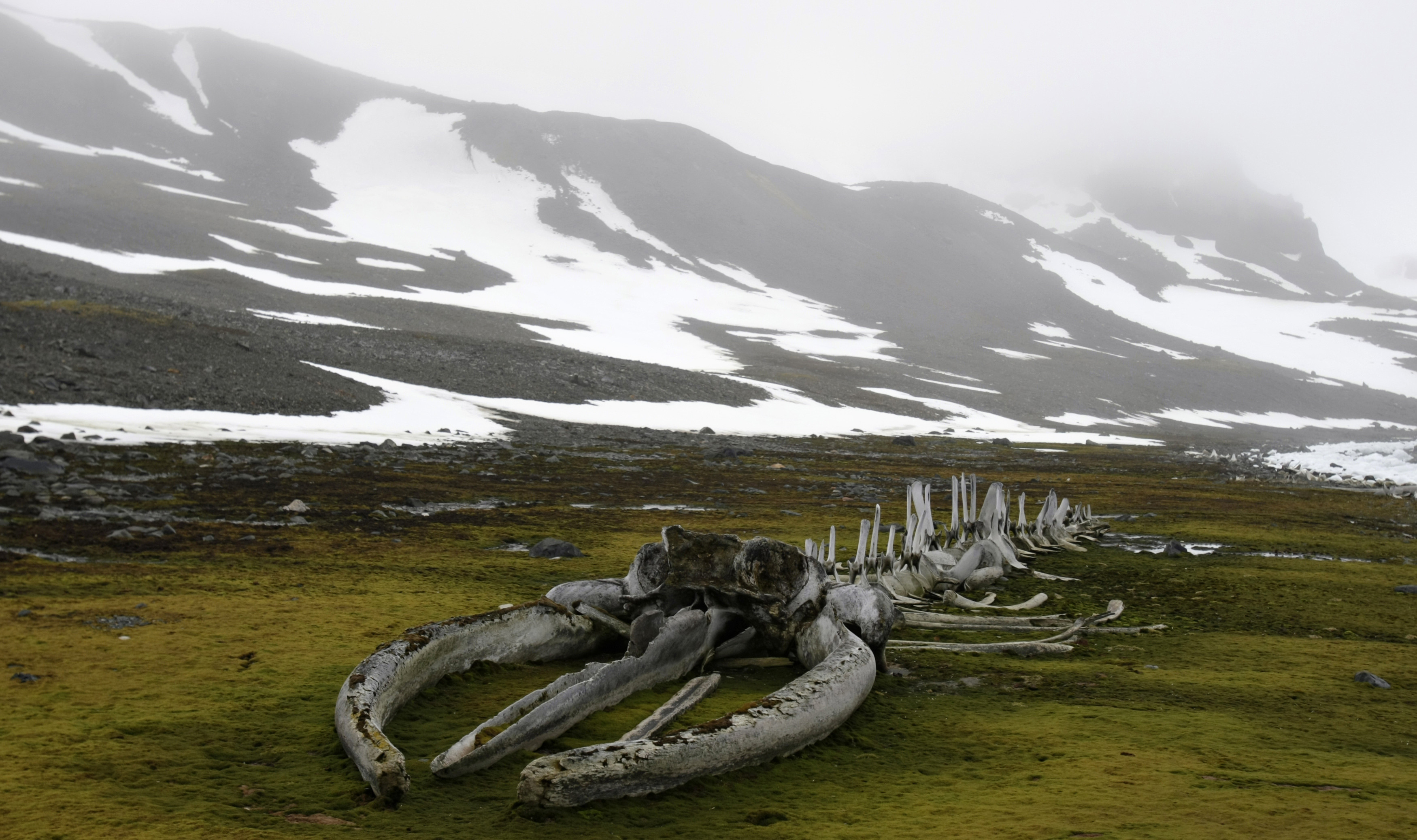A whale fossil is seen near to the Commandante Ferraz Brazilian Antarctic Station located in Admiralty Bay, King George Island on the Antarctic continent November 25, 2008. The whale fossil was constructed by French explorer Jacques Cousteau in 1979.    REUTERS/Paulo Whitaker   (ANTARCTICA) - GM1E4BQ0FJ201