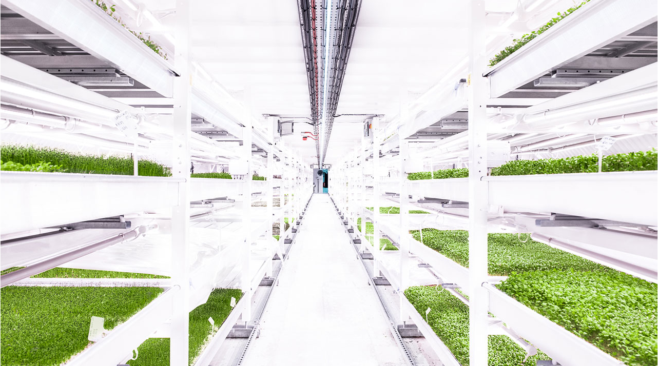 Vertical farming sustainability underground