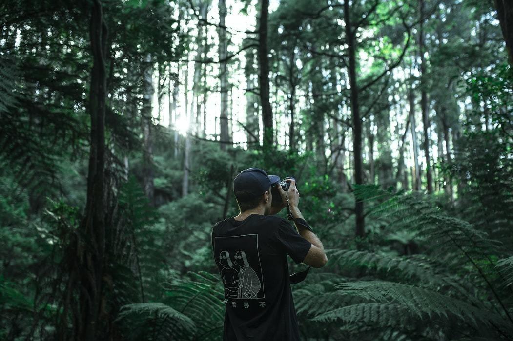 Los helechos arborescentes son antiguos, datan de cientos de millones de años y son anteriores a los dinosaurios.