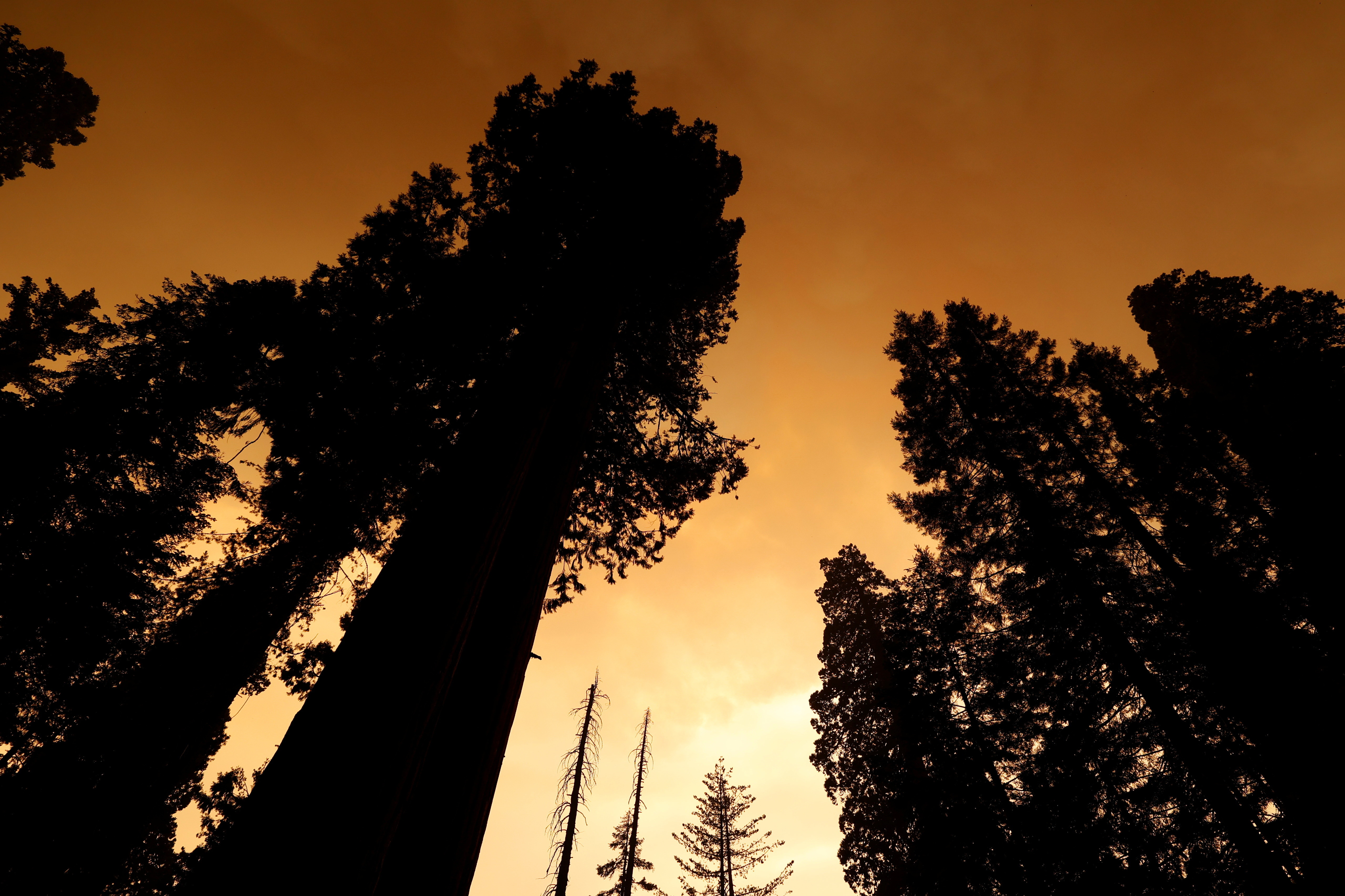 Smoke from a fire is seen through the trees of The Lost Grove in the Sequoia National Forest in California, U.S.