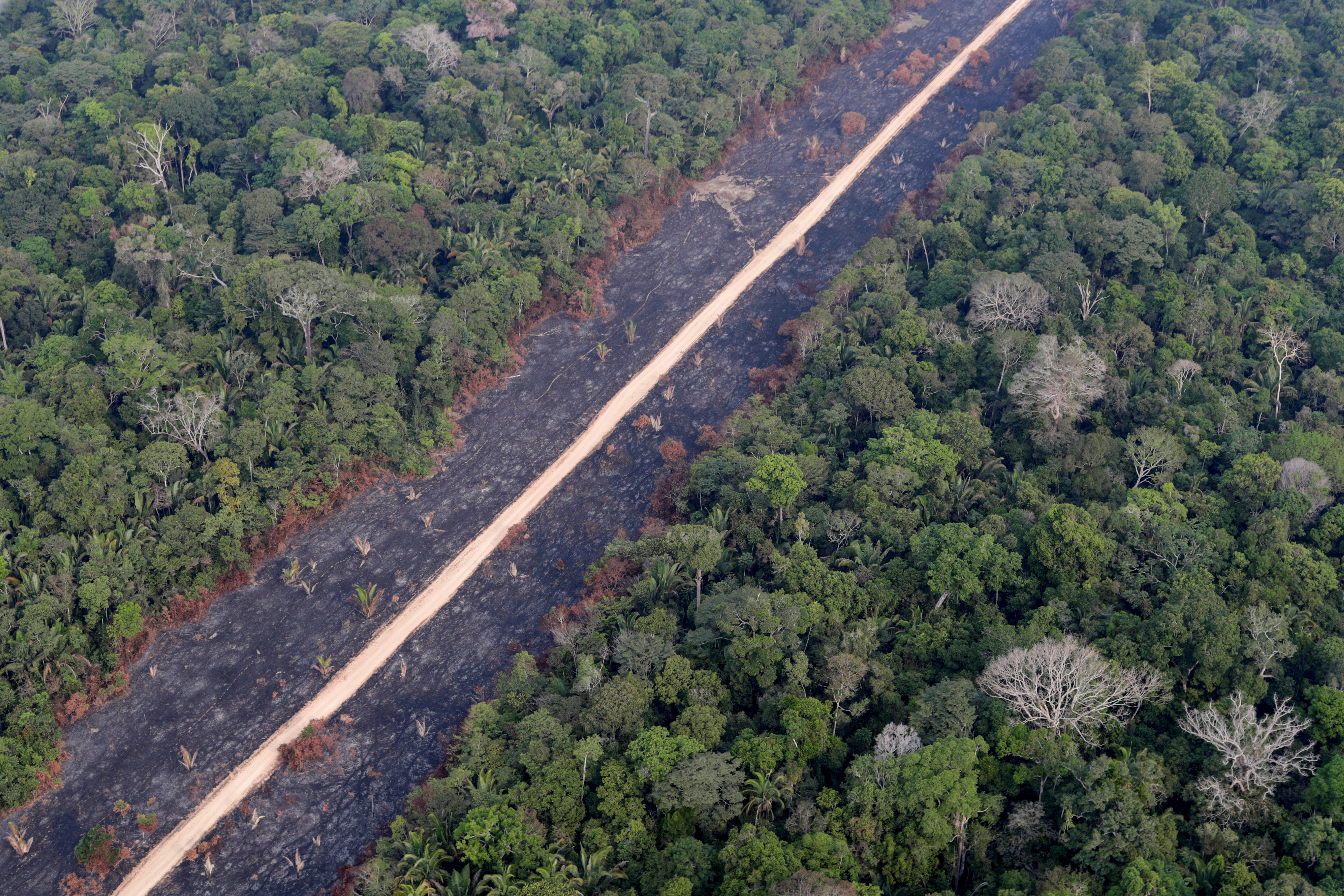"A road runs through a tract of burnt Amazon jungle near Porto Velho, Rondonia State, Brazil, August 14, 2020. Creatures of the Amazon, one of the earth's most biodiverse habitats, face an ever-growing threat as loggers and farms advance further and further into the rainforest. REUTERS/Ueslei Marcelino   SEARCH ""BRAZIL ANIMALS"" FOR THIS STORY. SEARCH ""WIDER IMAGE"" FOR ALL STORIES - RC2OTI9HSKR5"