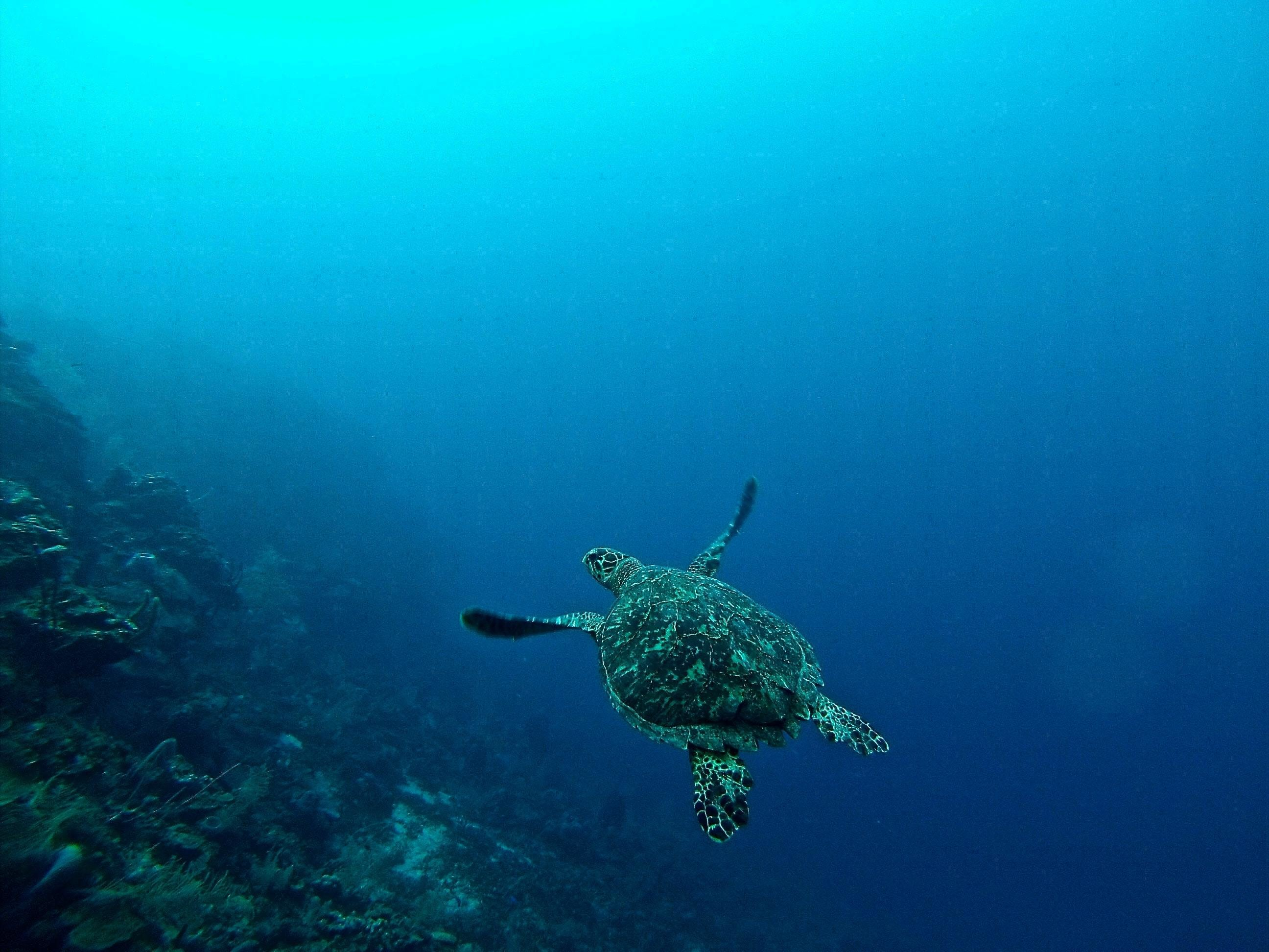 marine life such as this sea turtle are under serious threat from worsening problems affecting the ocean, like pollution and climate change