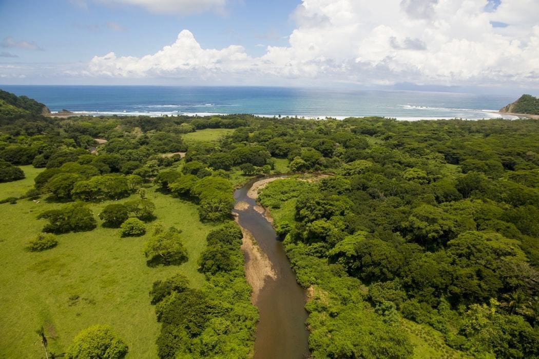 Forest in Costa Rica.