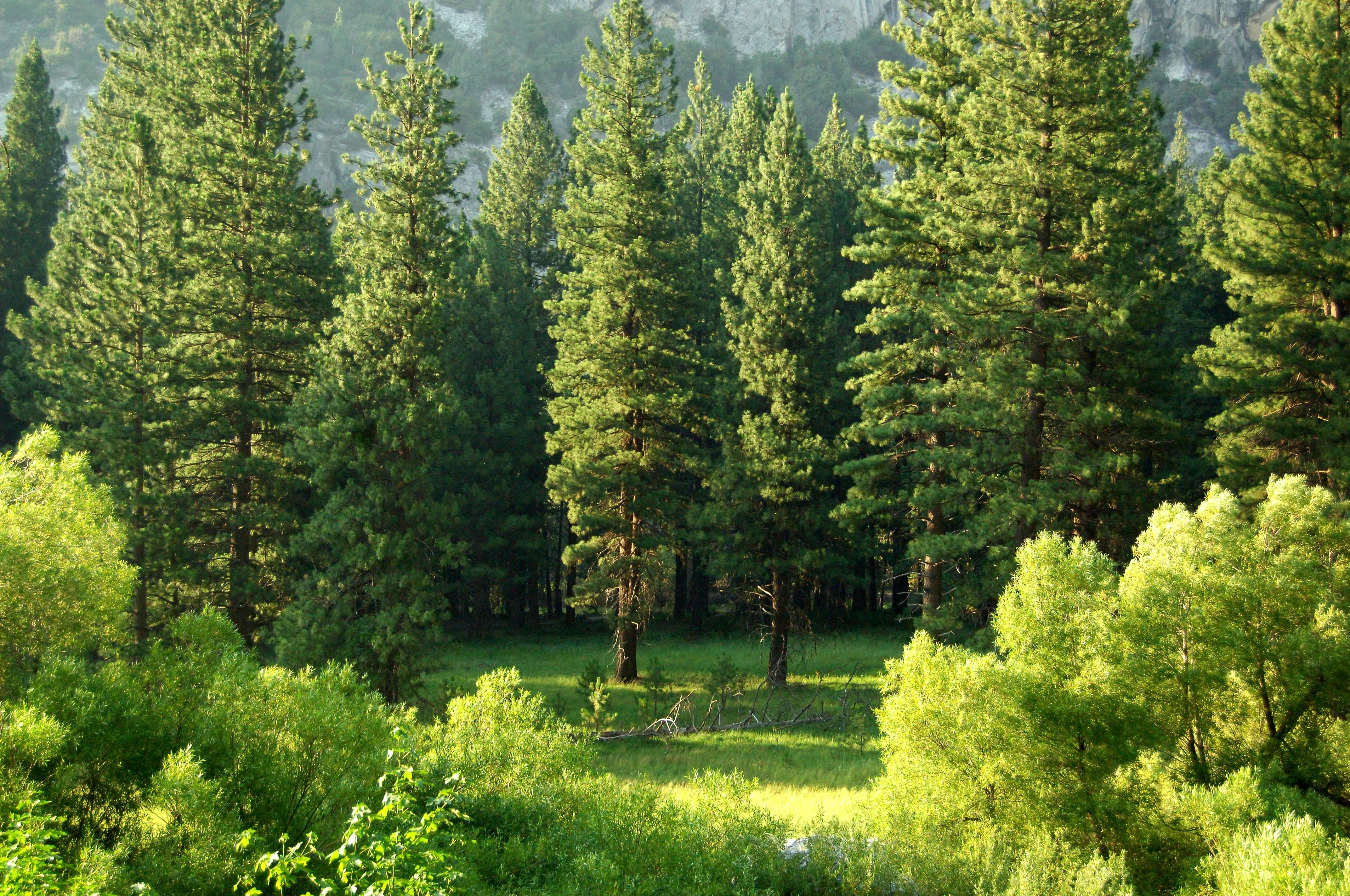 Image of trees in a forest, one of the world's natural carbon sinks.