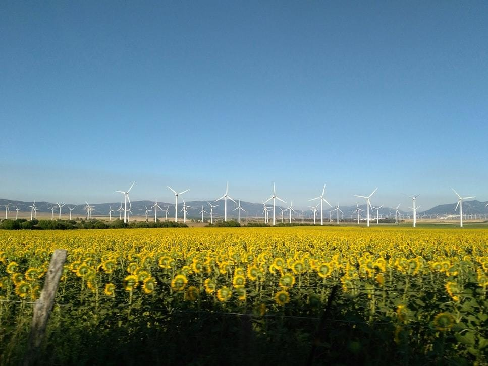 image of lots of wind turbines photographed across a field