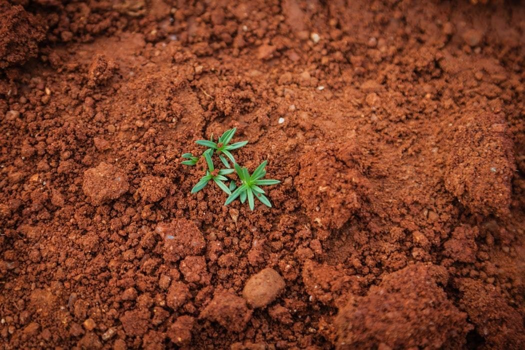 Soil with a singular plant growing.
