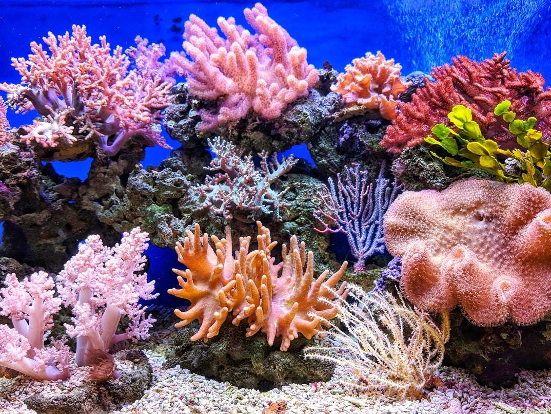 A brightly coloured coral reef
