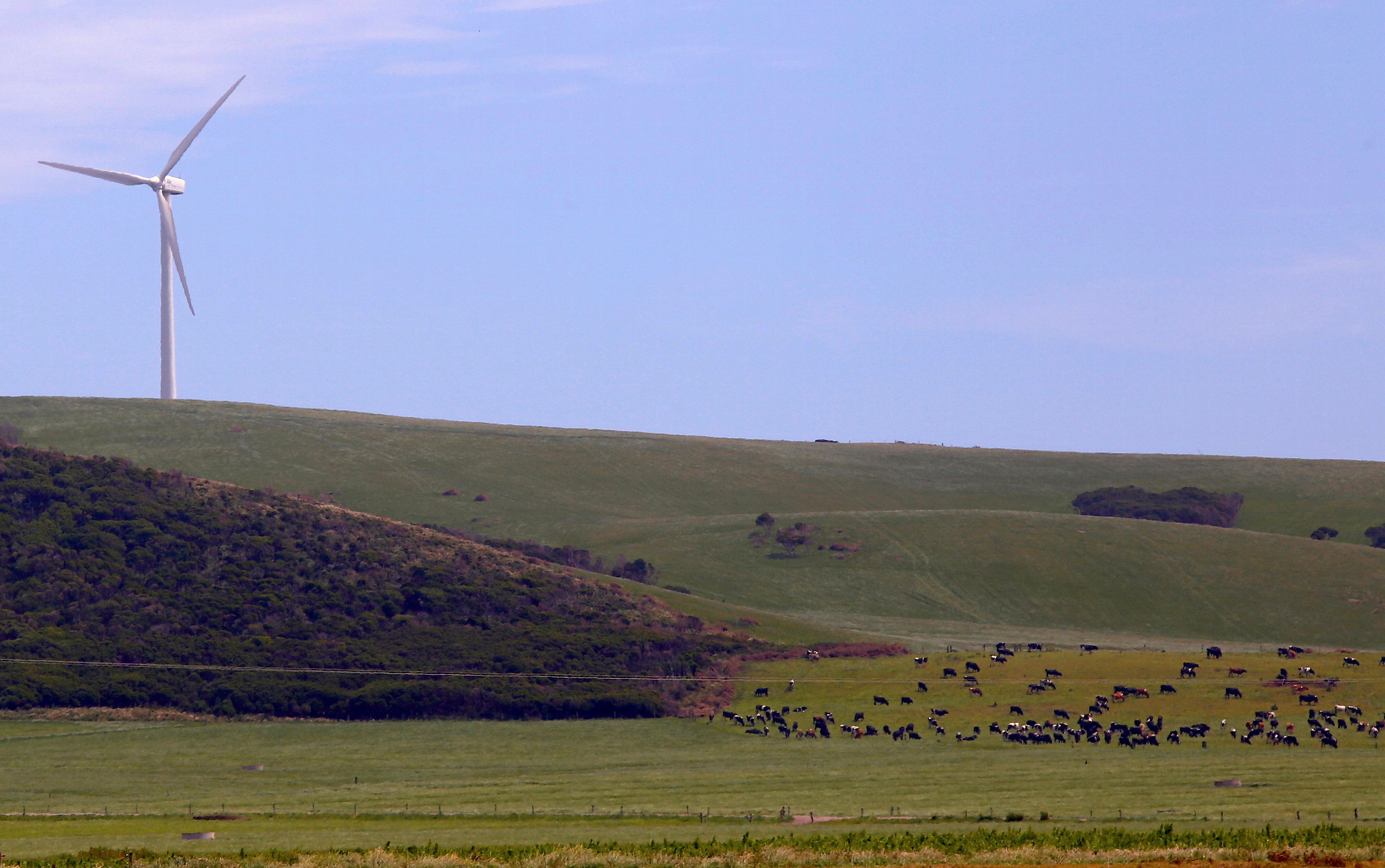 Cows gather in a paddock near a wind turbine on a property that is owned by Van Dieman's Land Co (VDL), Australia's largest dairy, located on the windswept northwest coast of the southern island state of Tasmania, near the town of Smithton, Australia, November 17, 2016. Picture taken November 17, 2016. REUTERS/David Gray - RC1FF21A80A0
