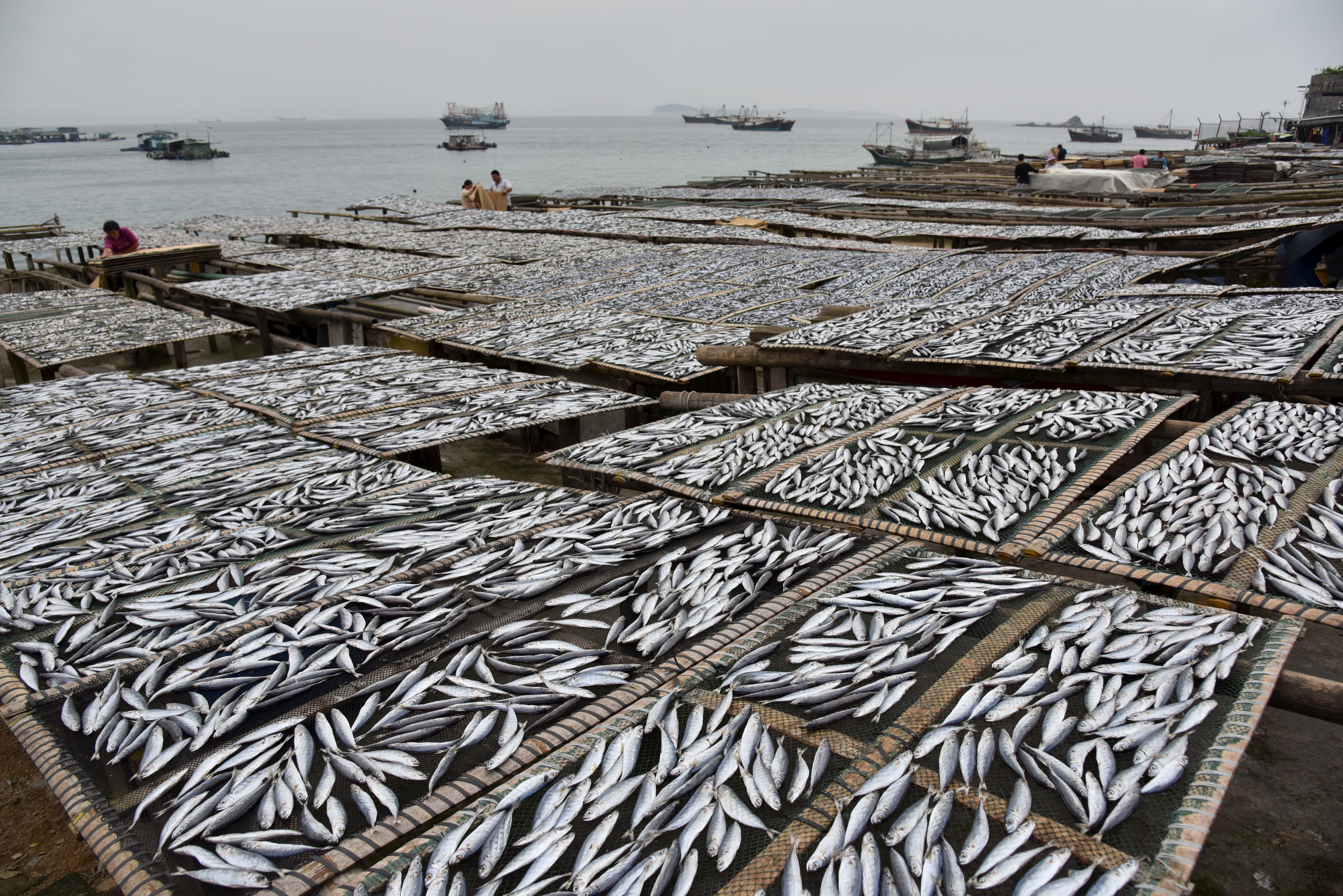 Fish are seen being dried at a shoreside in Shenzhen, Guangdong Province, China, April 21, 2016. REUTERS/Stringer ATTENTION EDITORS - THIS PICTURE WAS PROVIDED BY A THIRD PARTY. THIS PICTURE IS DISTRIBUTED EXACTLY AS RECEIVED BY REUTERS, AS A SERVICE TO CLIENTS. CHINA OUT. NO COMMERCIAL OR EDITORIAL SALES IN CHINA. - GF10000391890
