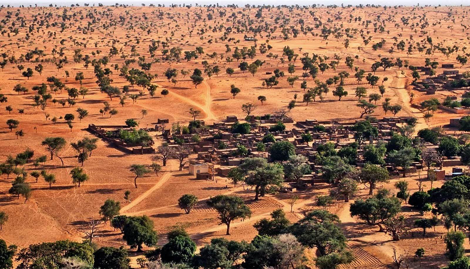 AI has just revealed there are over 1.8 billion trees in the Sahara Desert